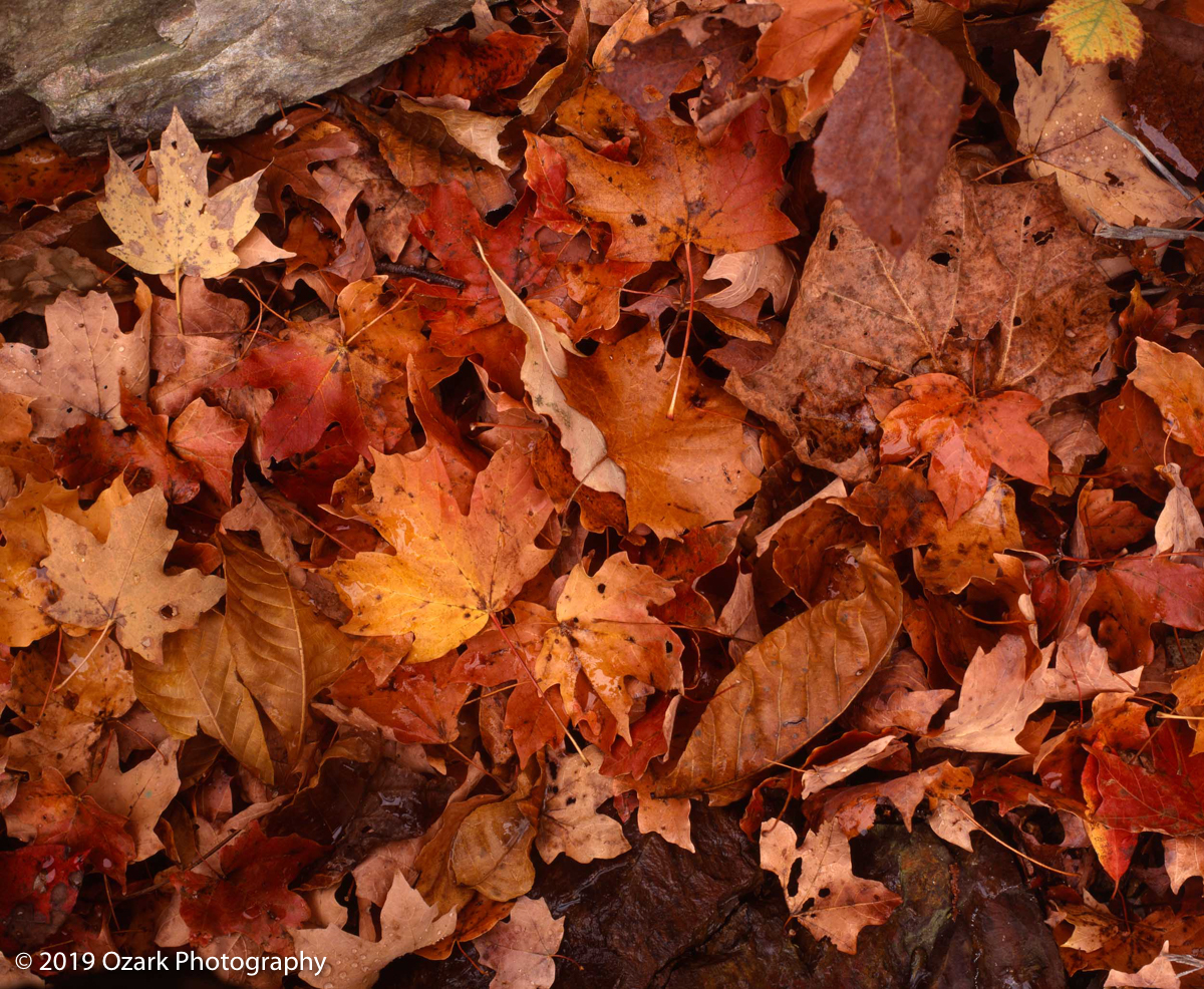 autumn leaves1.jpg