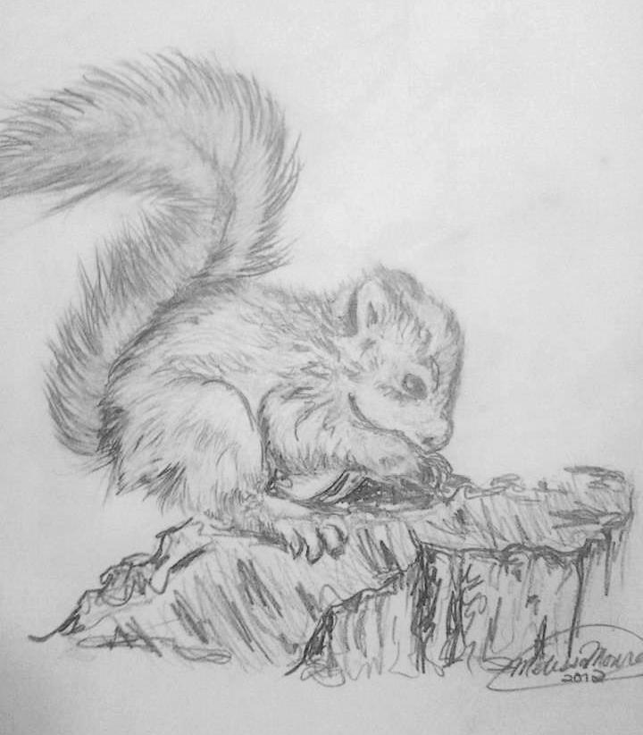 2012_Squirrel.jpg