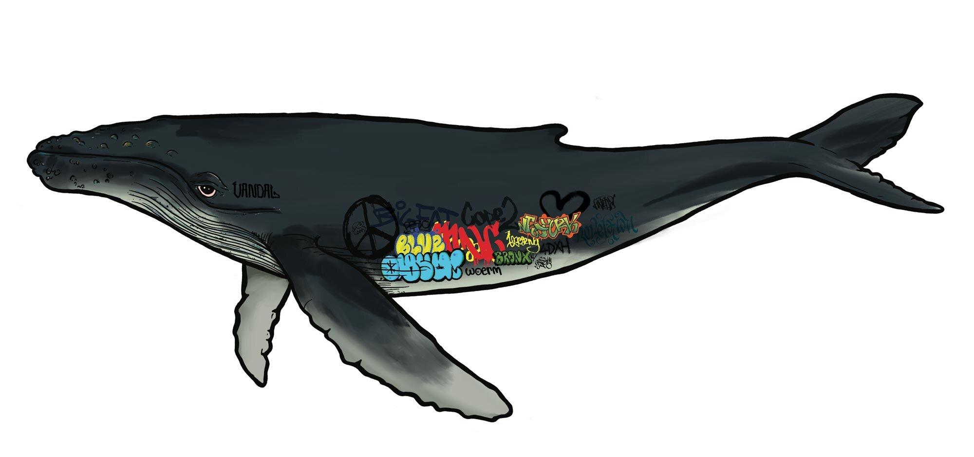 Graffiti-Whale.jpg