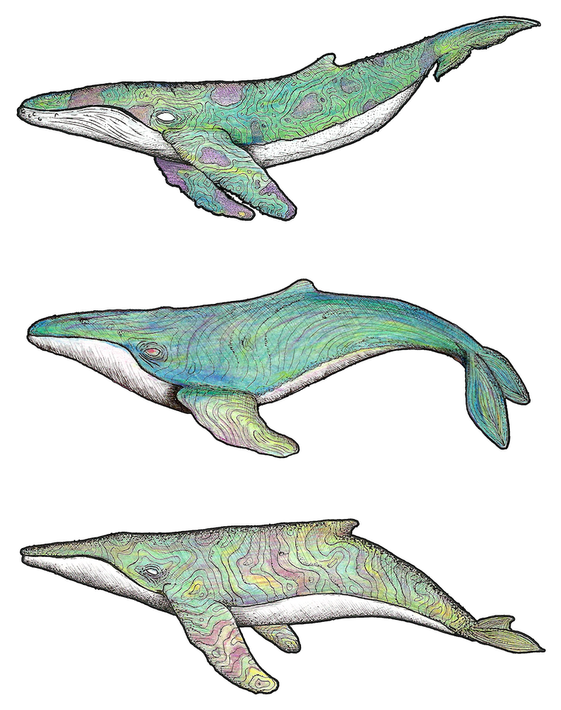 3-whales-edit 2.png