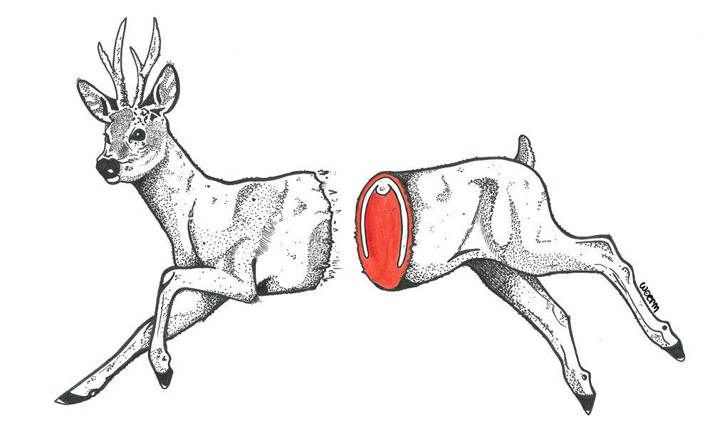 Deer-half-woerm.jpg