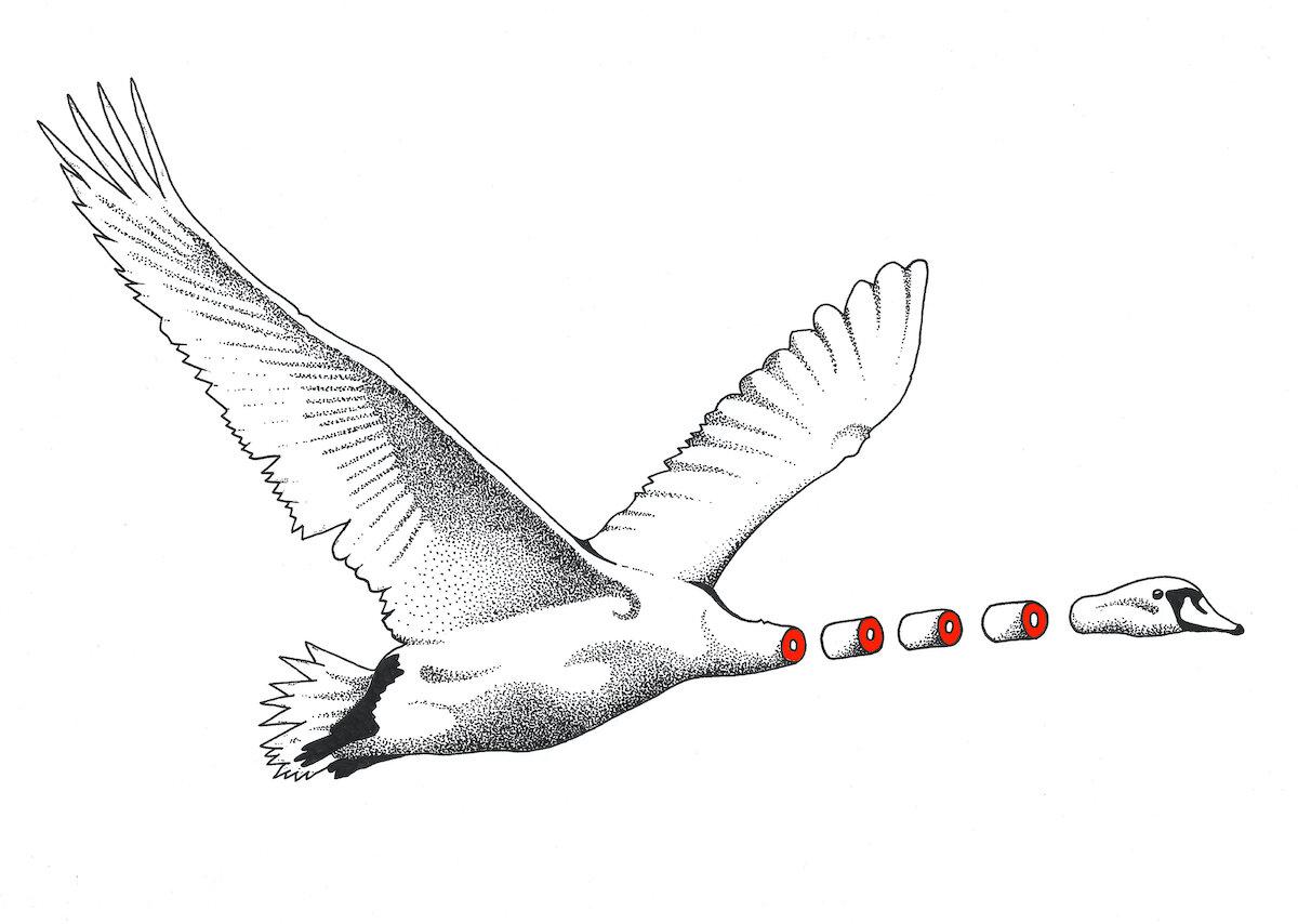 Flying-Swan-chopped-neck-SCAN-1 2.jpg