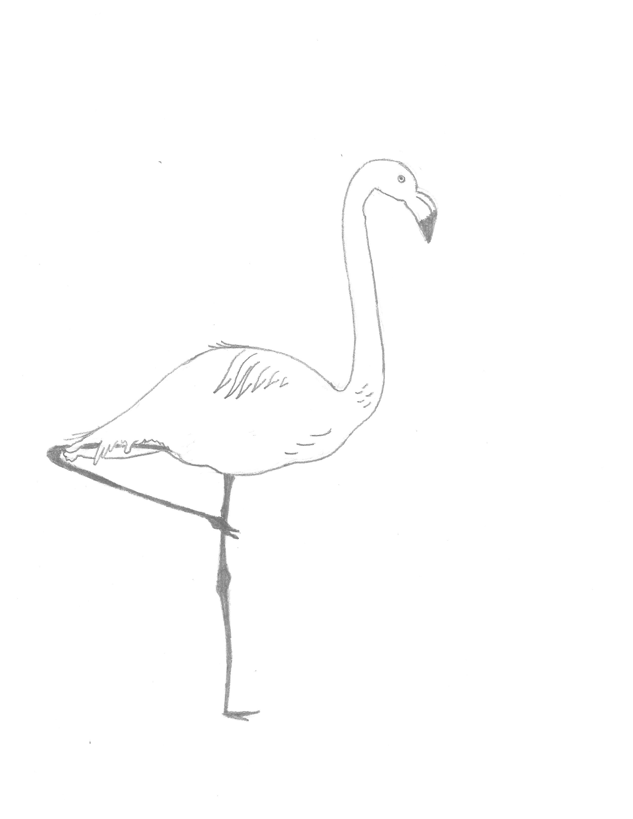 Alexandra_Flamingo.jpg