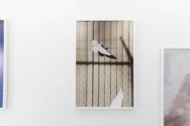 Bird-1.jpg