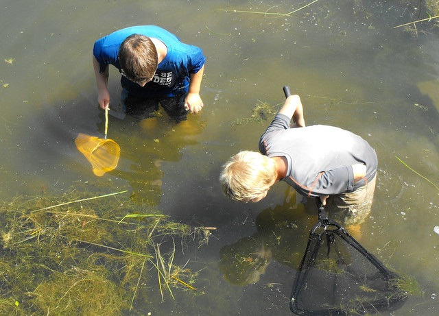 Scooping up tadpoles