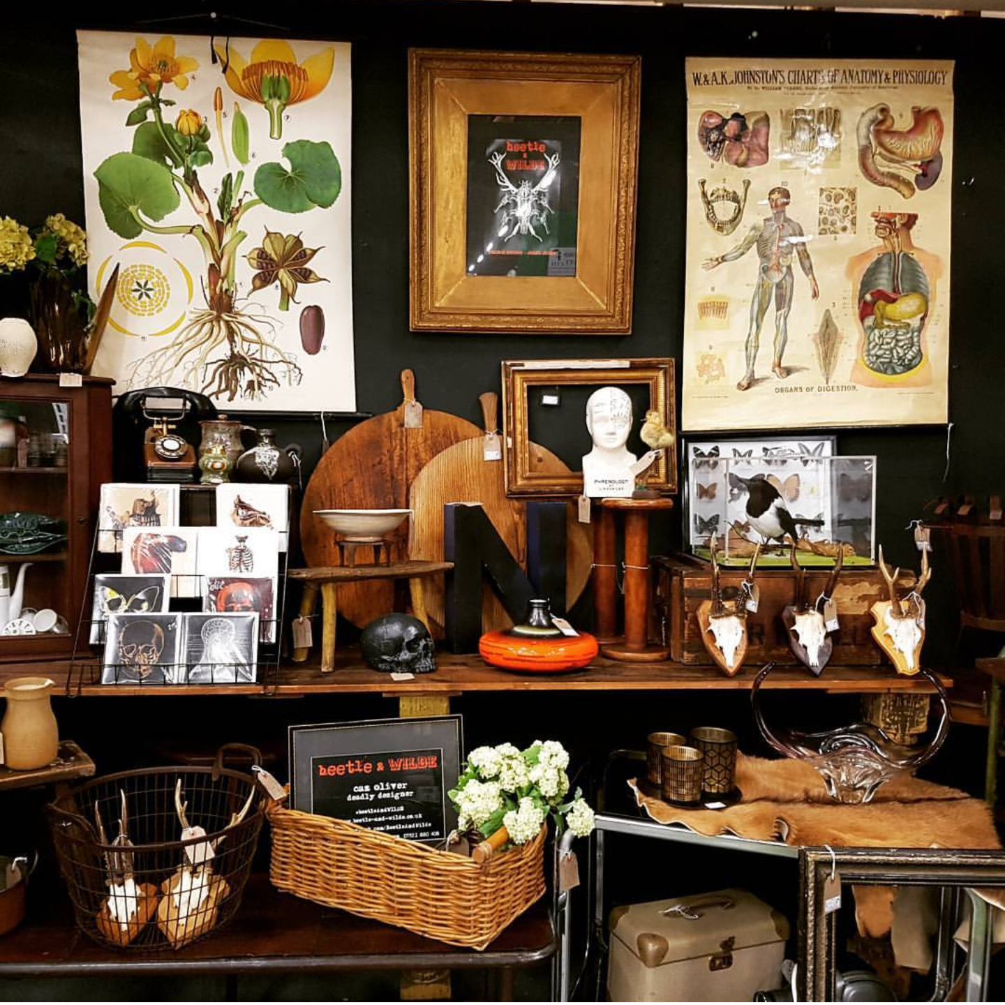 A cornucopia of curiosities will be coming with Caz to the Occasional Home Store
