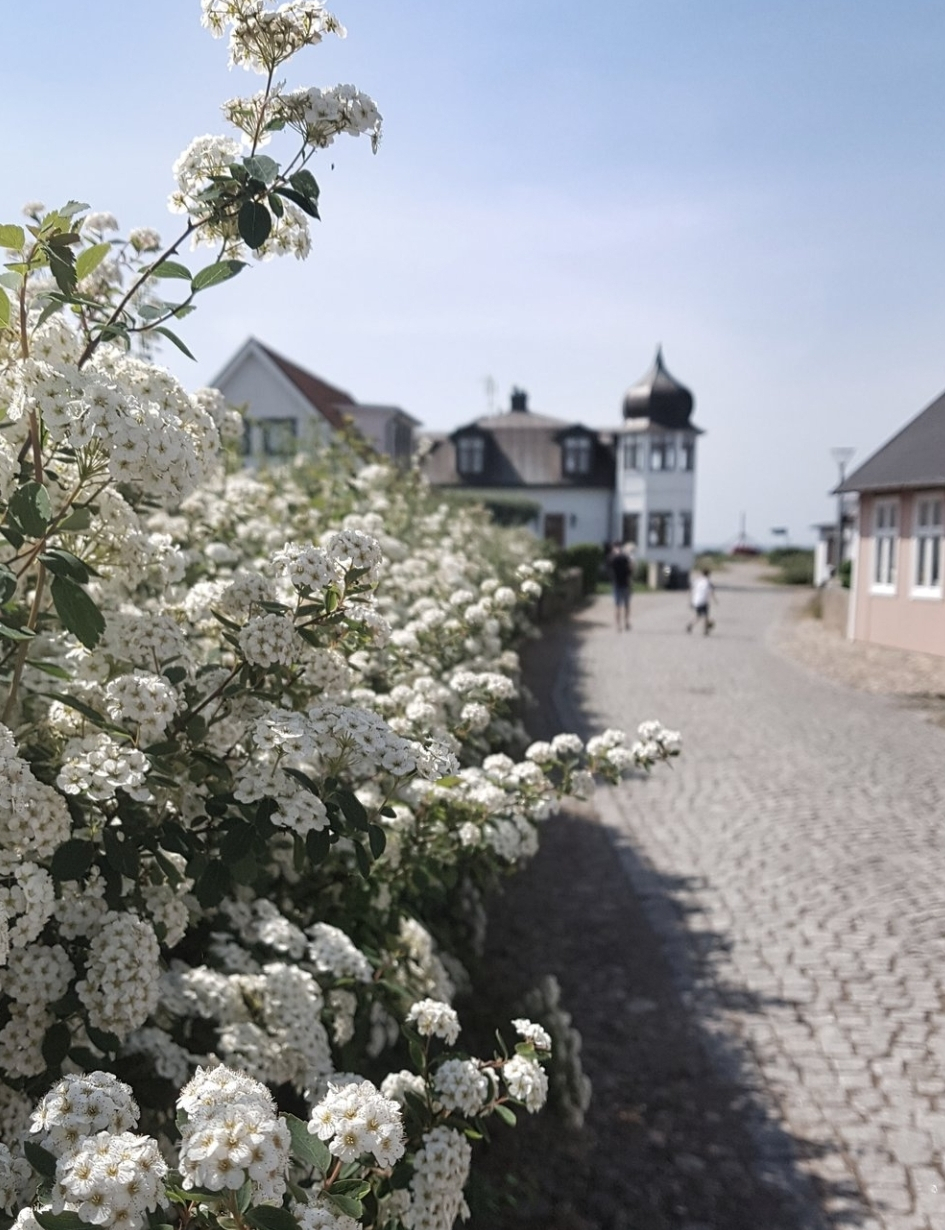 The beautiful street of Torekov in Southern Sweden, which I was lucky enough to visit this year as a guest of Visit Sweden in the UK and Malmo Town