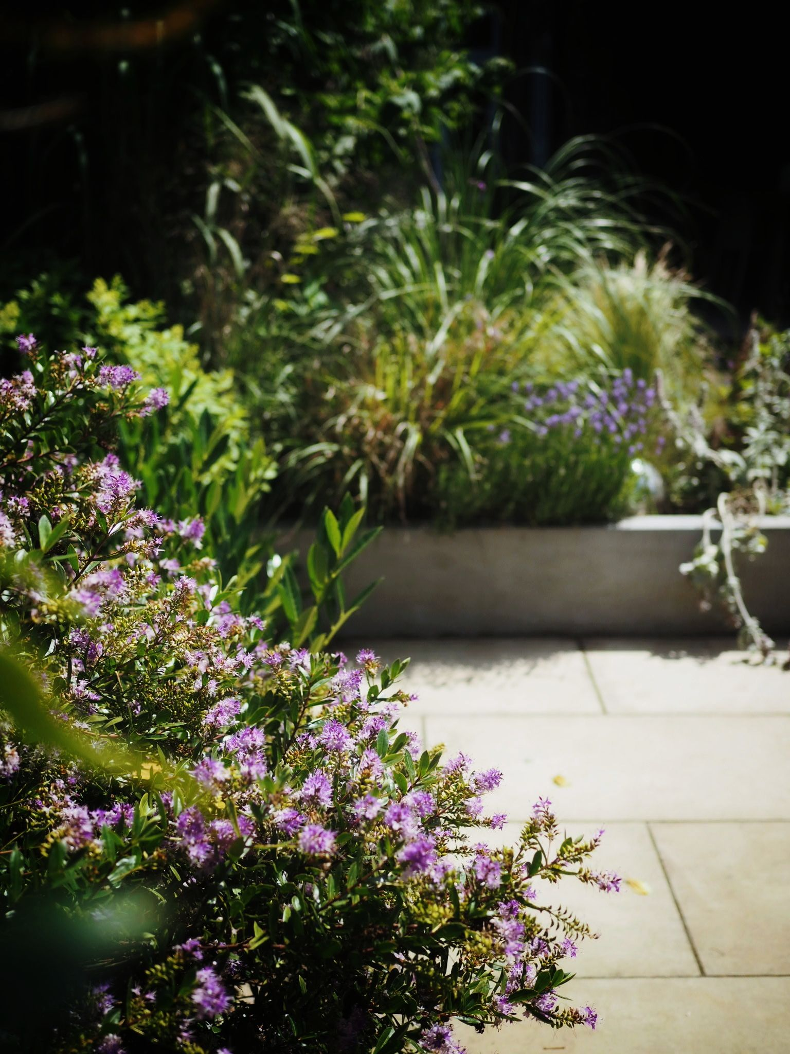 A corner of our old garden where I proved to be surprisingly green fingered