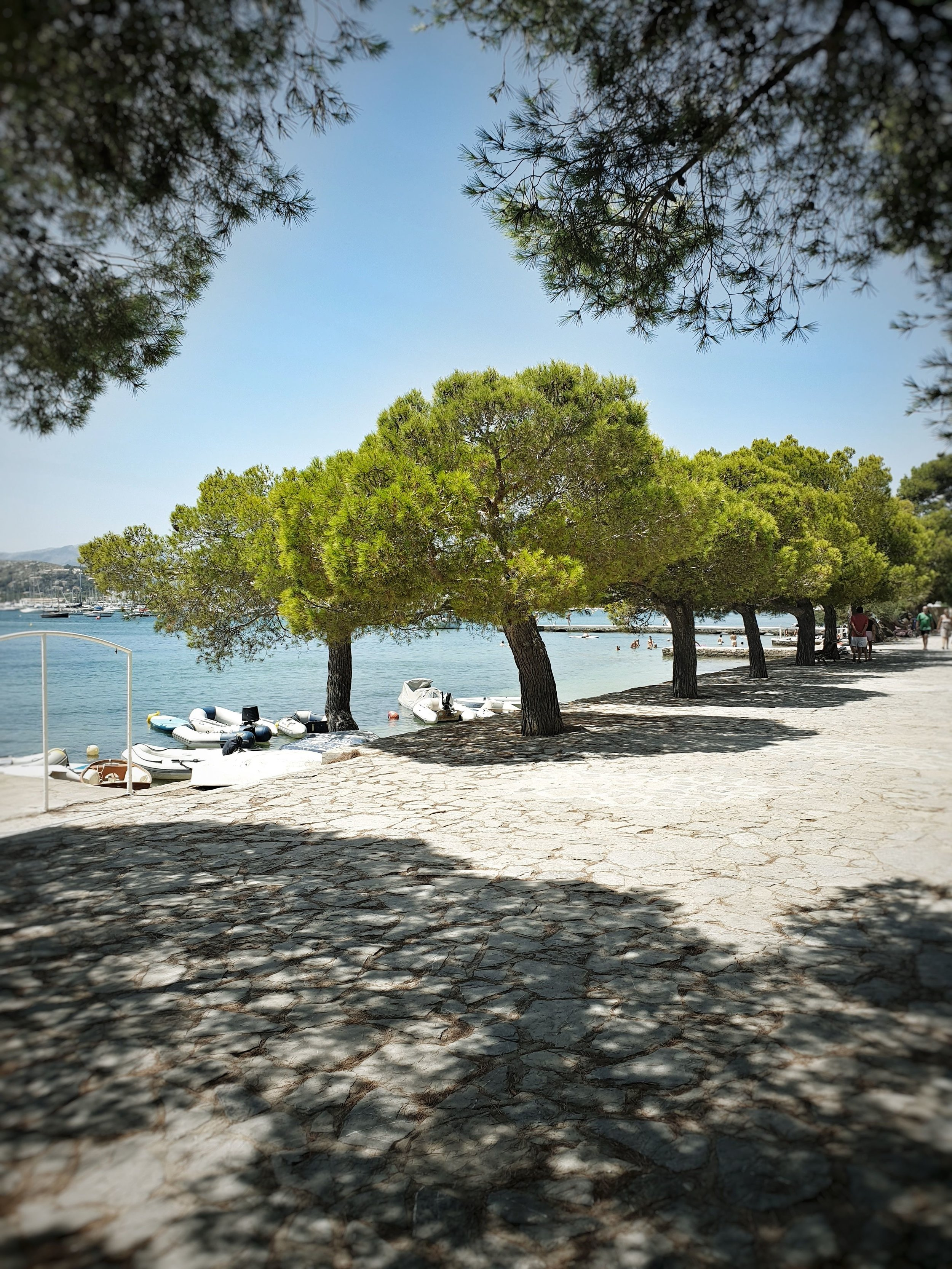 The lovely shady pine walk in Port de Pollensa