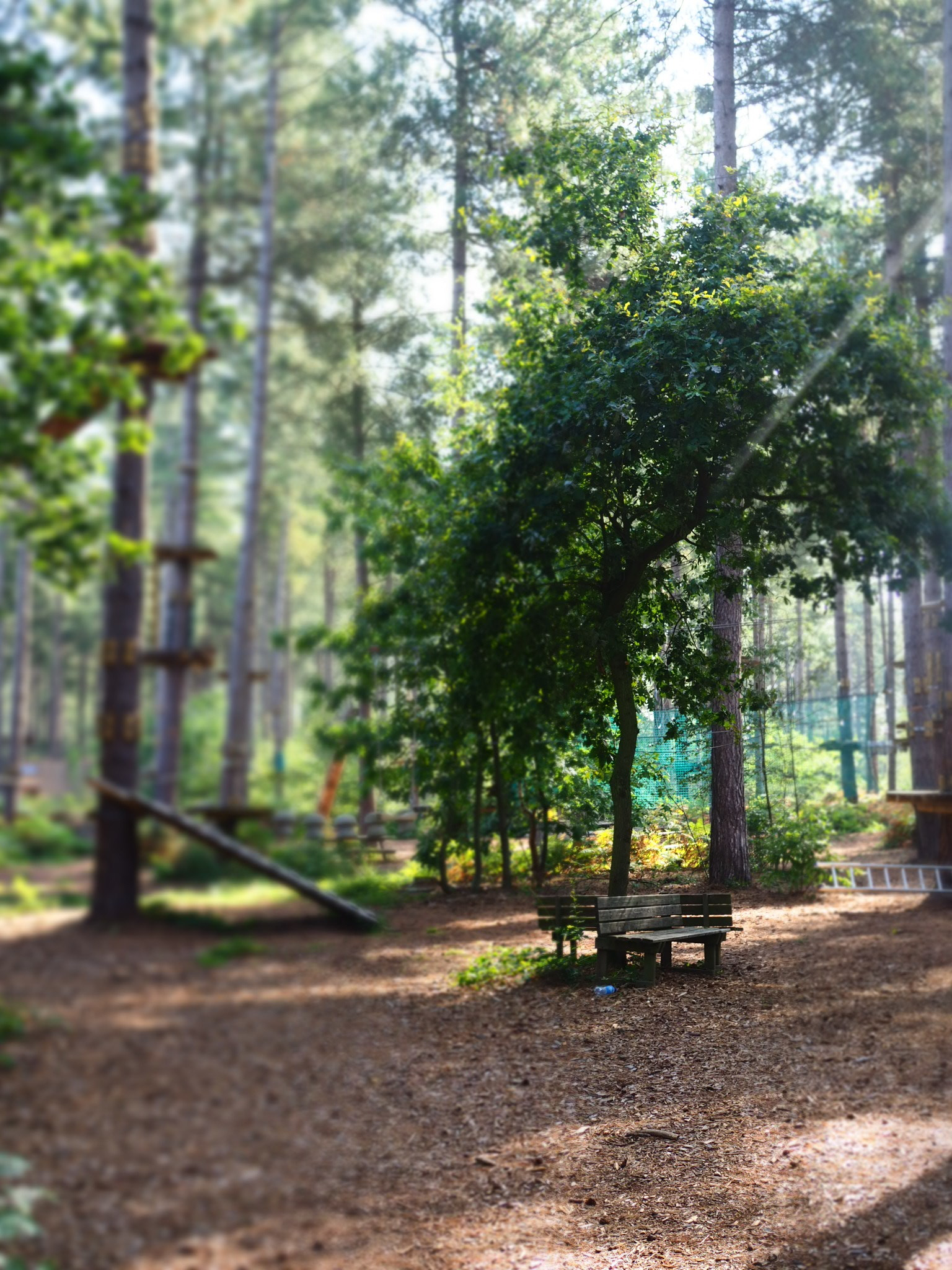 The Go Ape style adventure park