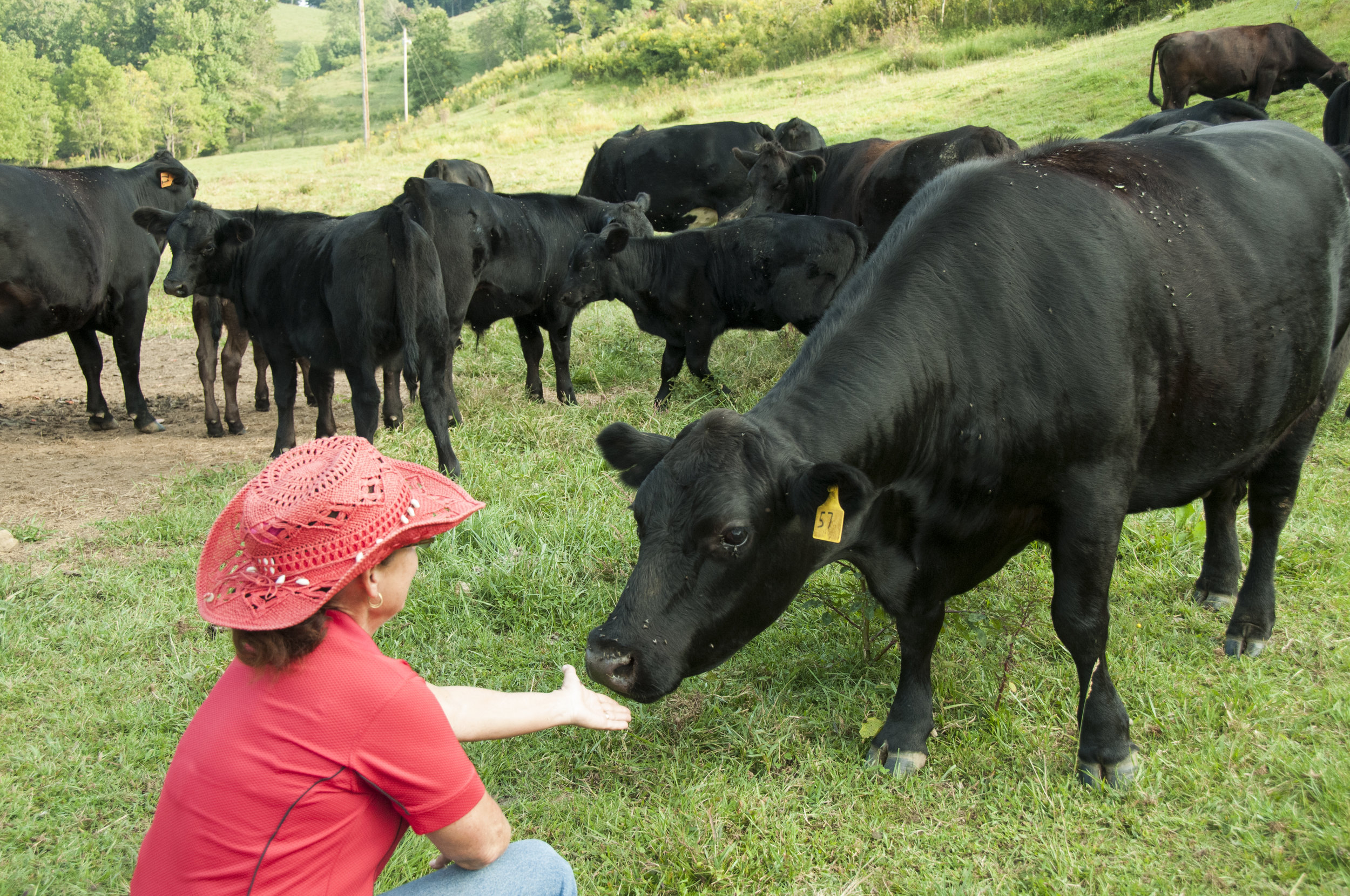 Farmer Carolyn Bradley at Farm House Beef says hello to her herd. Photo courtesy ASAP by Sarah Jones