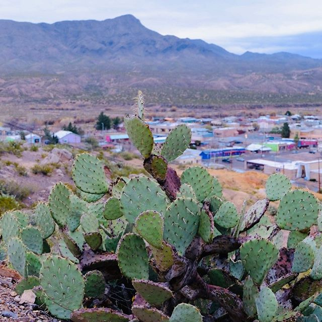 That time we went on our honeymoon in TorC 😍 New Mexico is so magical, diverse, and inspirational ✨ ⛰ 🌵 // // // // // // #truthorconsequences #desert #torc #newmexico #nmtrue #honeymoon #cactus #inspiration #cacti #turtlebackmountain #mountains #themountainsarecalling #southwest #bohemian #freespirit