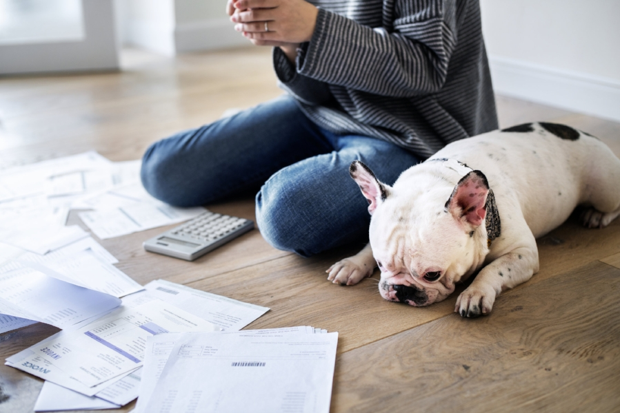 Even your dog knows how hard it is to bootstrap your financial strategy.