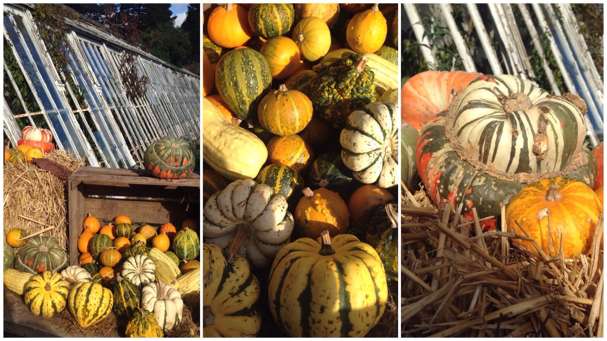 The gathering in of autumn's harvest - the colours!
