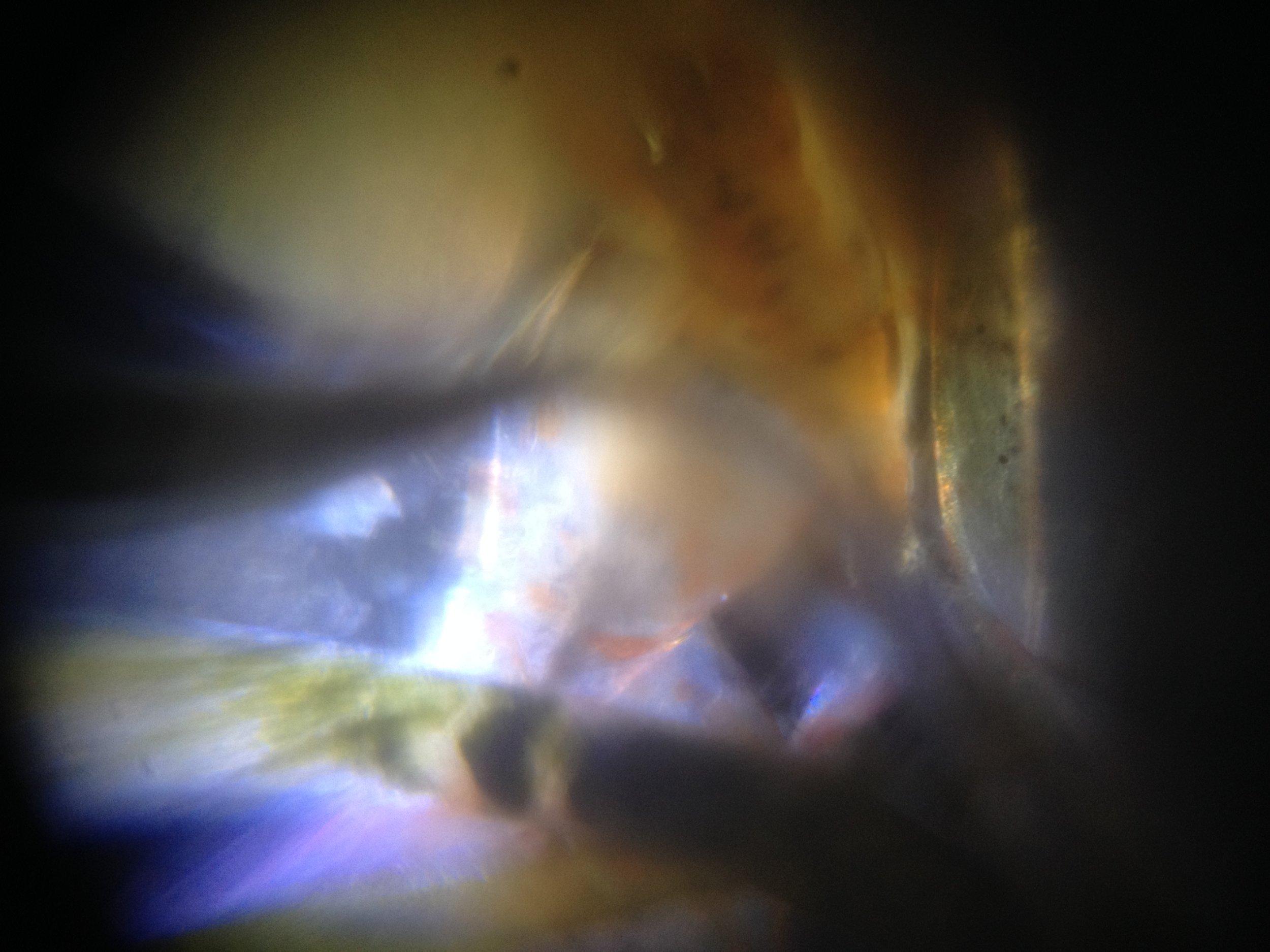 Skeleton Shrimp.jpg