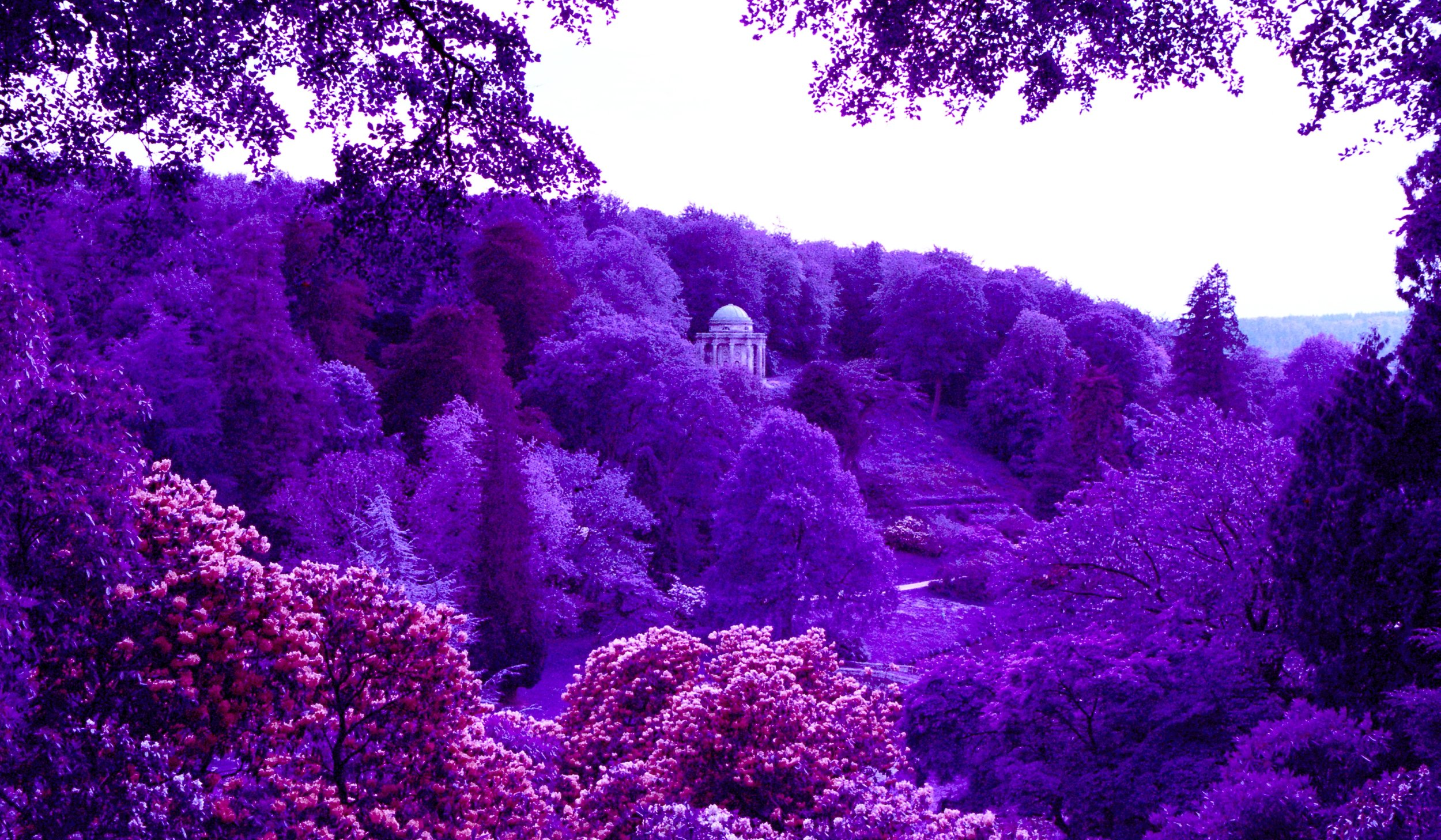 If you want purple then go for foliage!