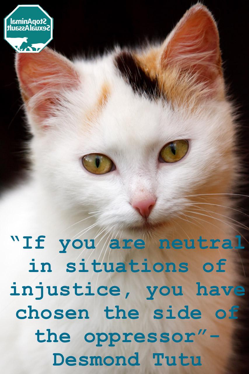 Cat- sides of injustice.jpg