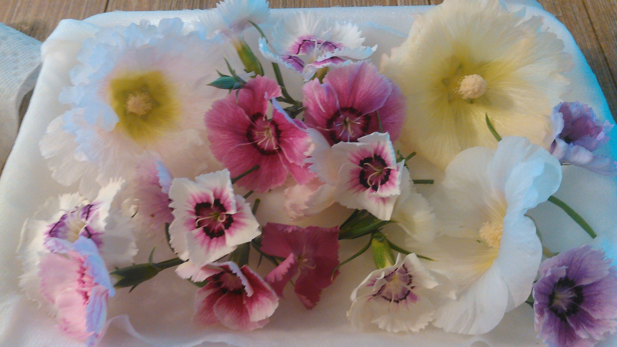 Edible Flowers 2.jpg