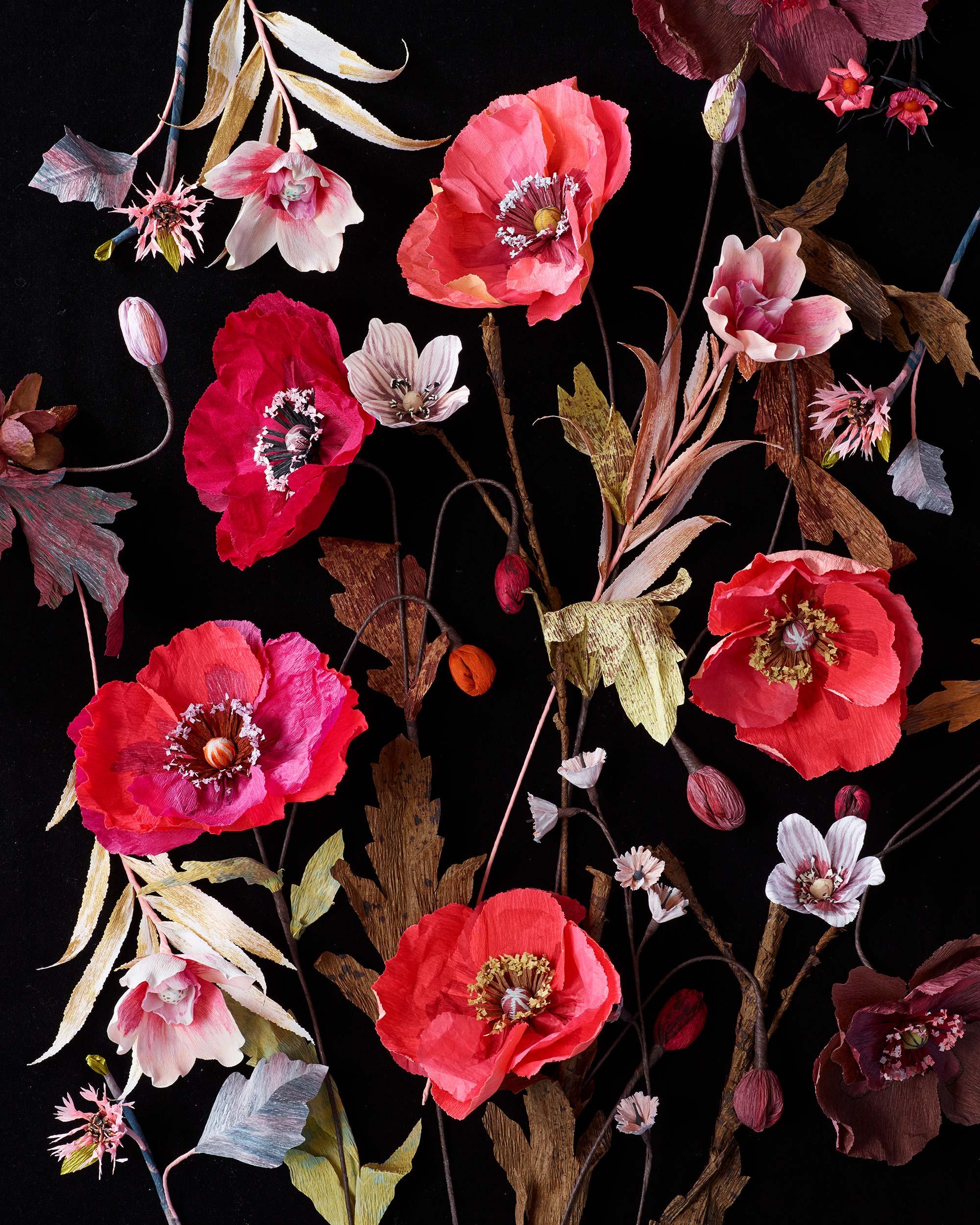Poppies-On-Black_0071.jpg