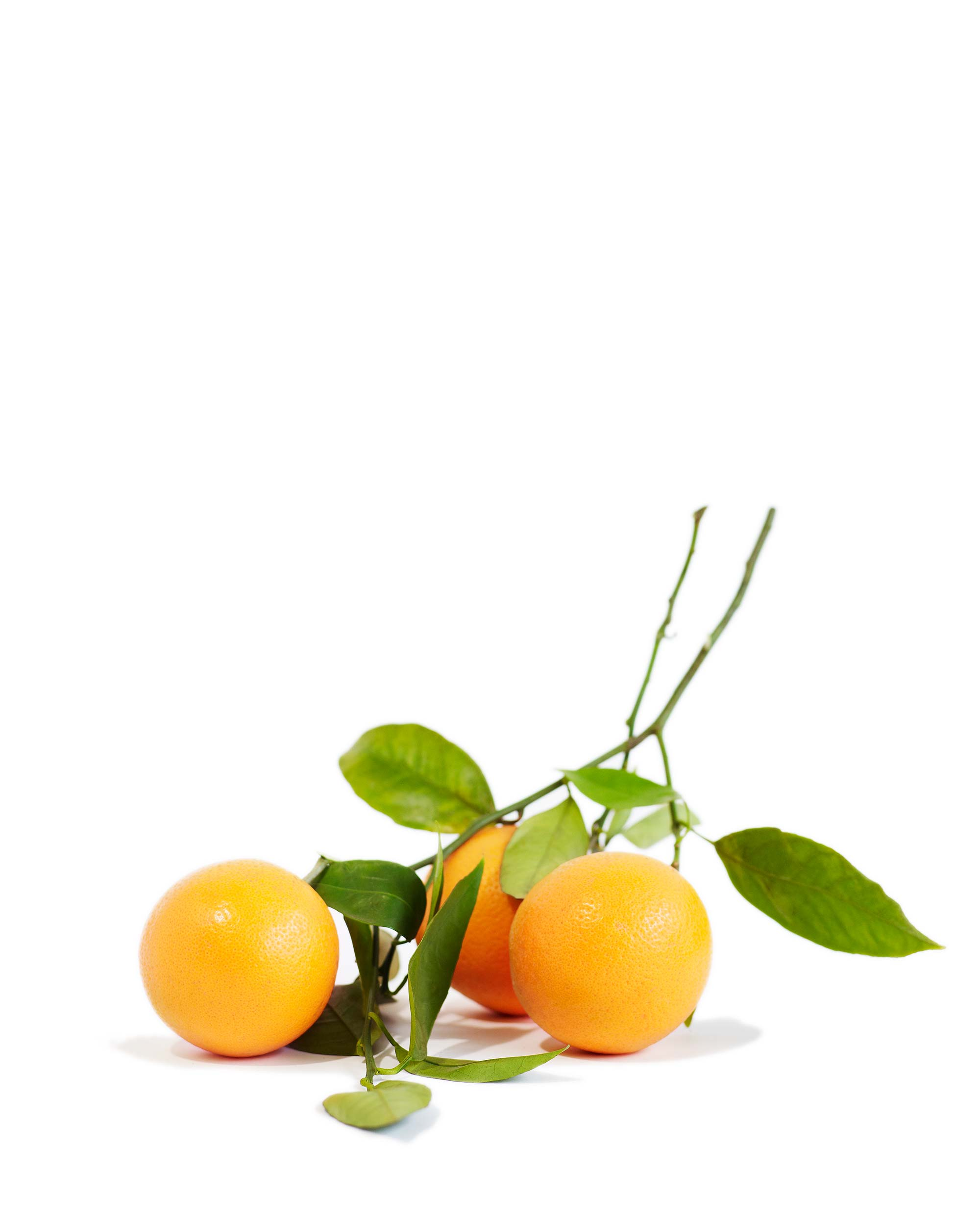 Fruit-Branches_0022.jpg