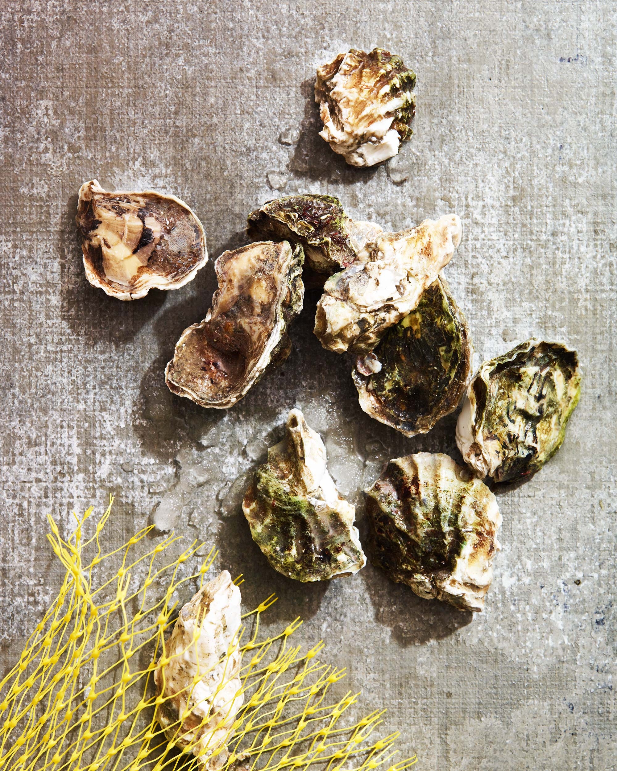 Oyster-Party_0544.jpg