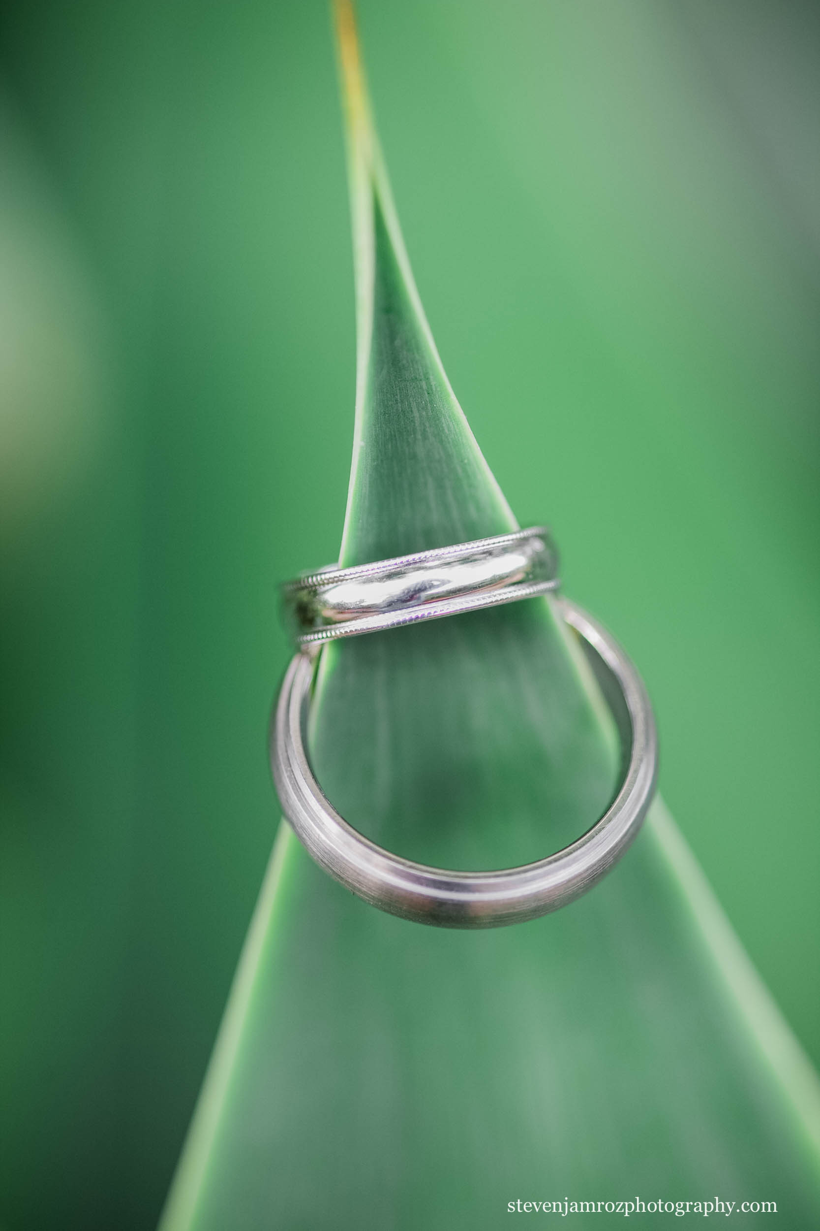 wedding-rings-on-green-plant-photograph.jpg