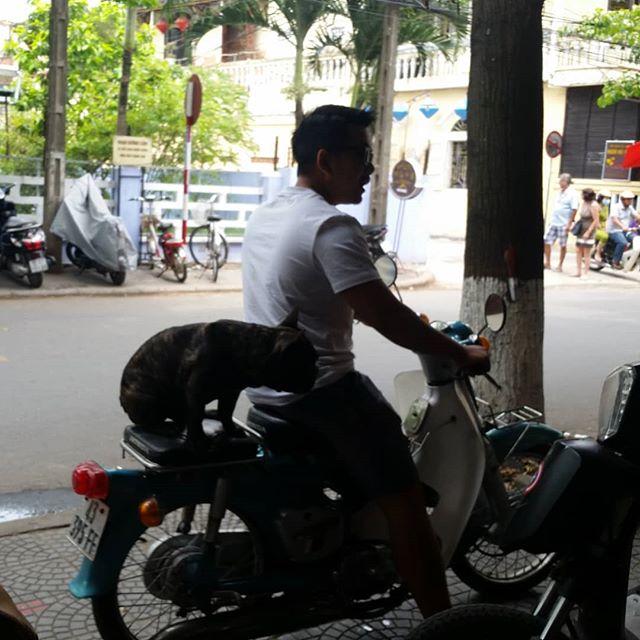 Hello from Vietnam! Where the bulldogs ride shotgun on motorbikes.