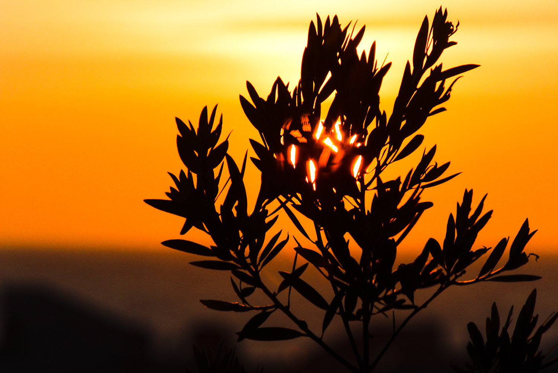 Shades of Sunset 1