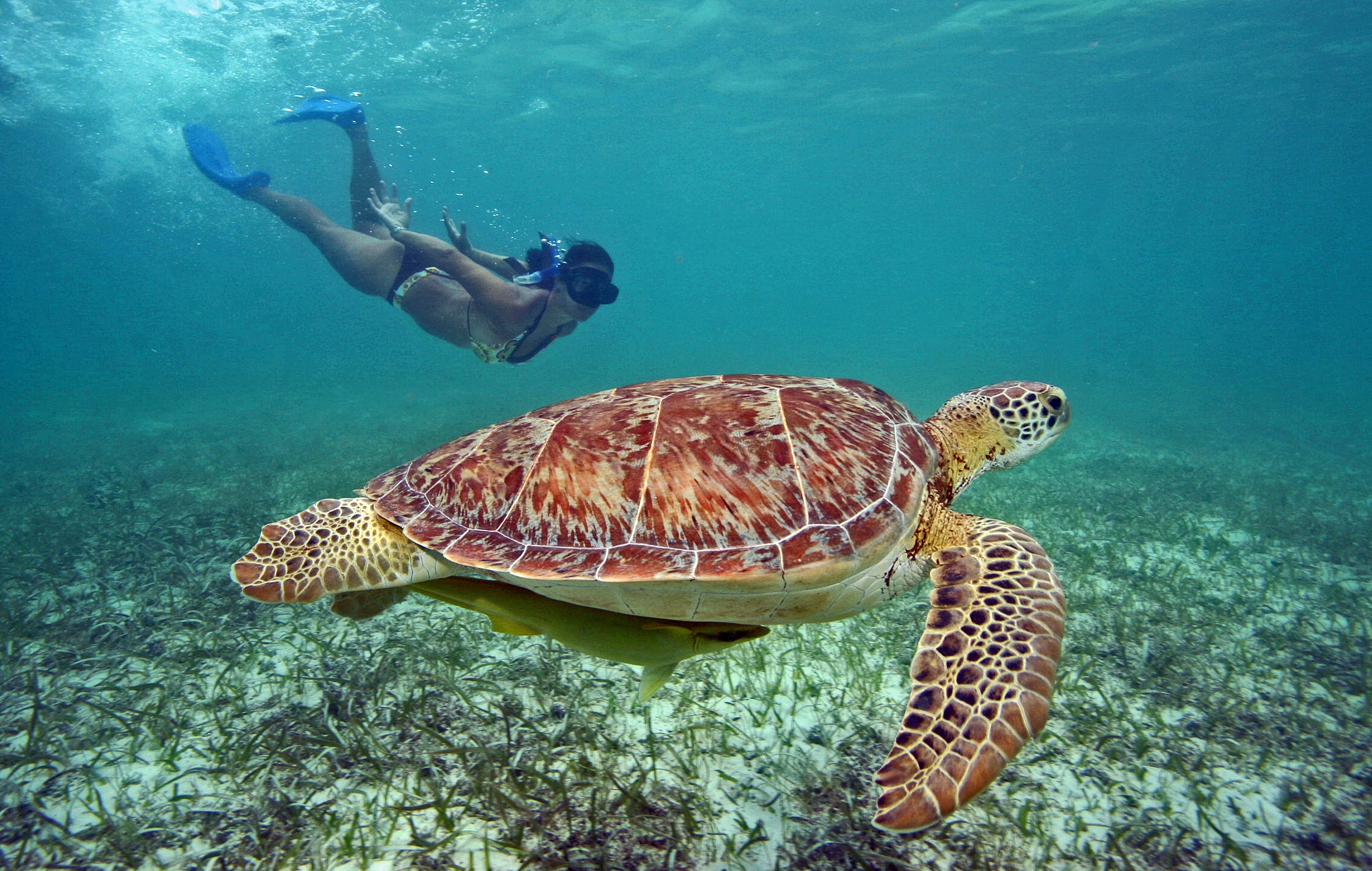 top-tours-cancun-cenotes-and-turtles-main.jpg