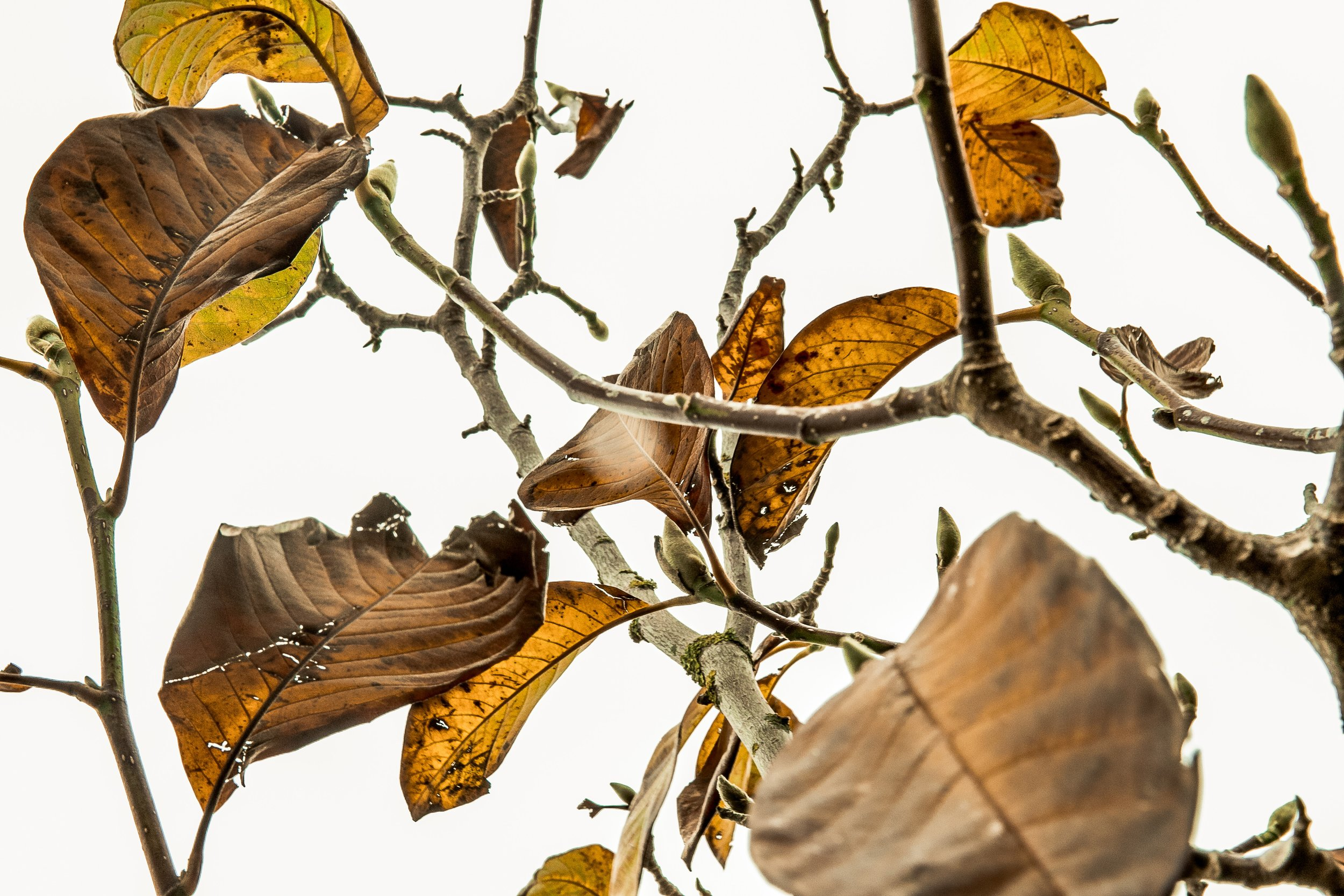 dried leaves.jpg