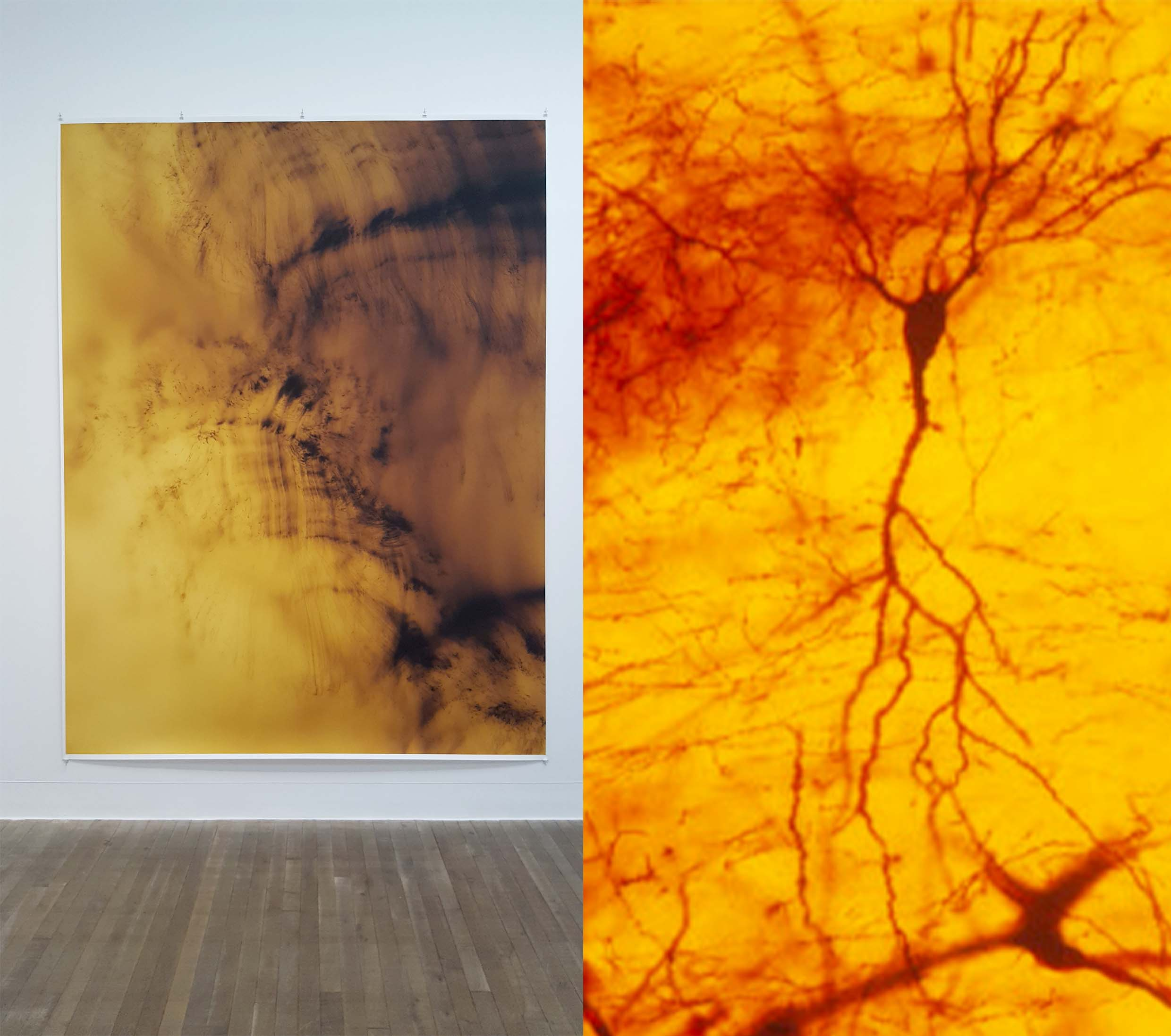 tillmans' abstraction and silver staining of a neuron for comparison
