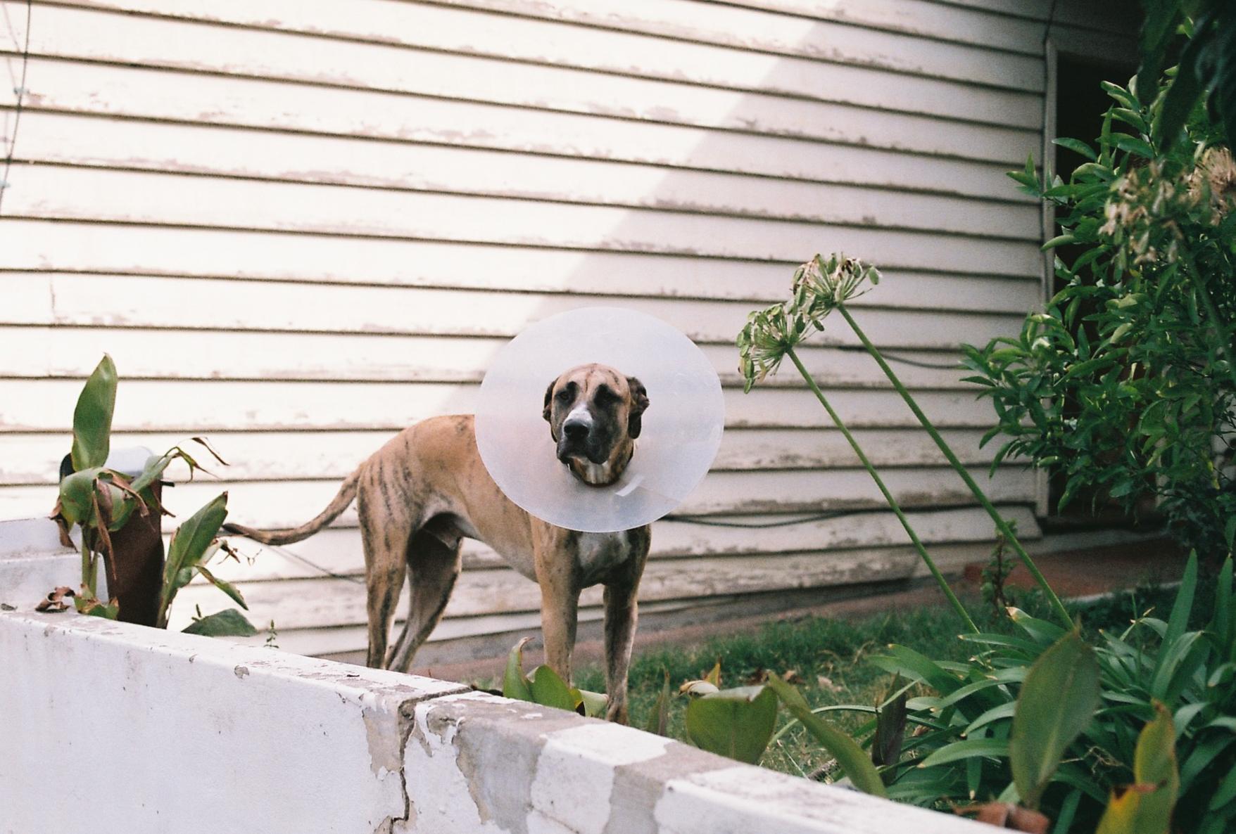 photography suburb melbourne dog garden doggo