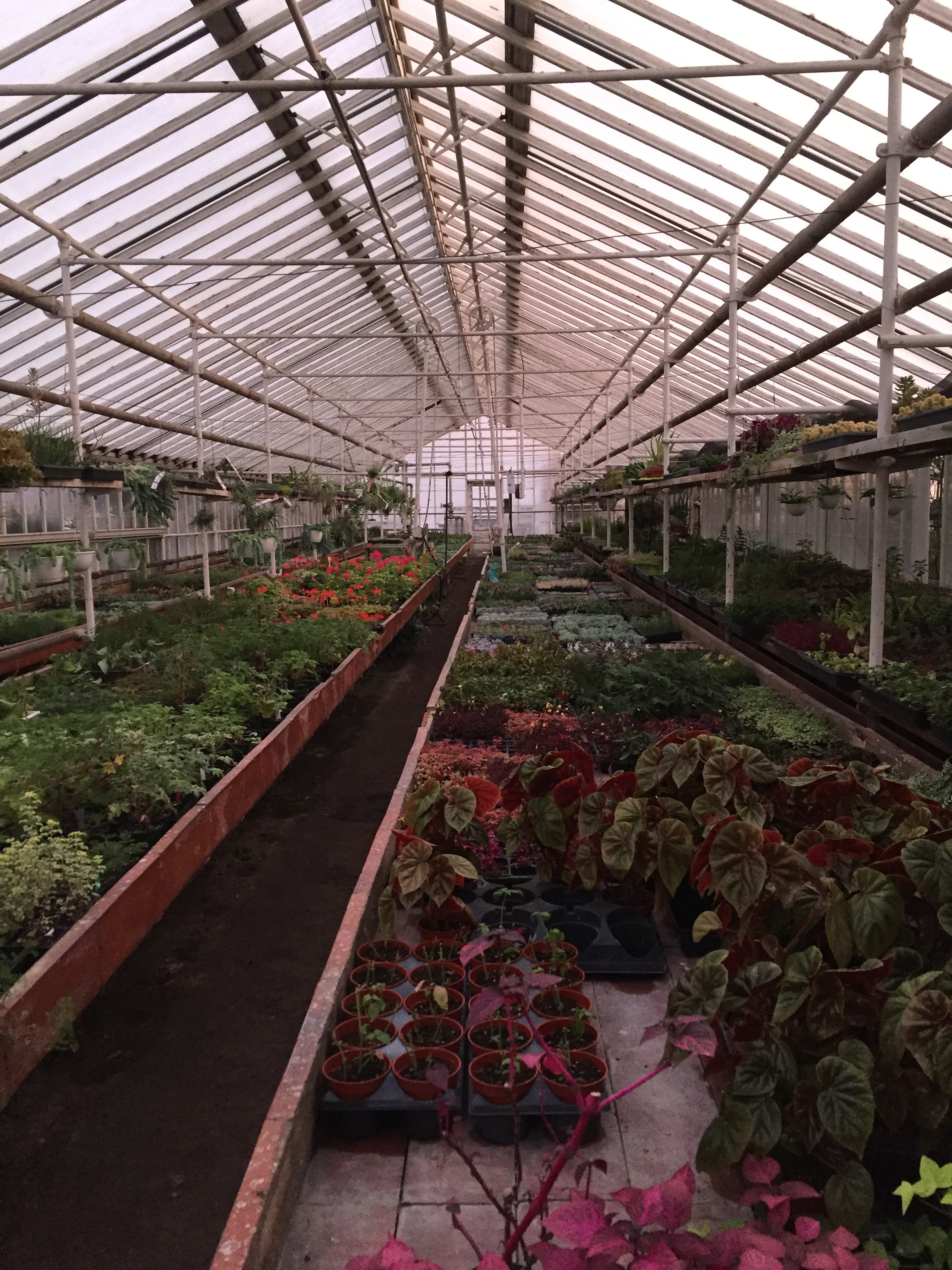 The greenhouse…a little more recently