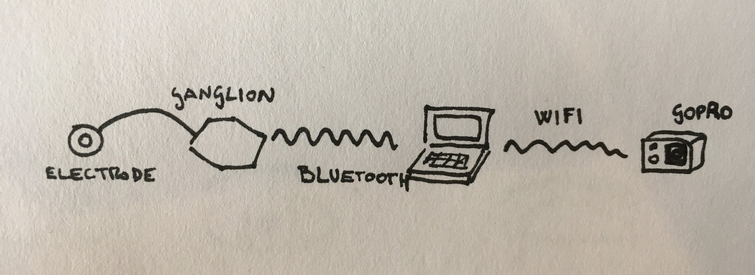Sketch of the setup. Open BCI's Ganglion board connects to a Processing sketch running on the laptop via Bluetooth. Information about eye blink detection is then sent from Processing to a Node.js application, which controls a GoPro camera through wi-fi. The future iteration of the project will omit the computer to increase the portability of the setup. Alternatives to the GoPro will also be considered.