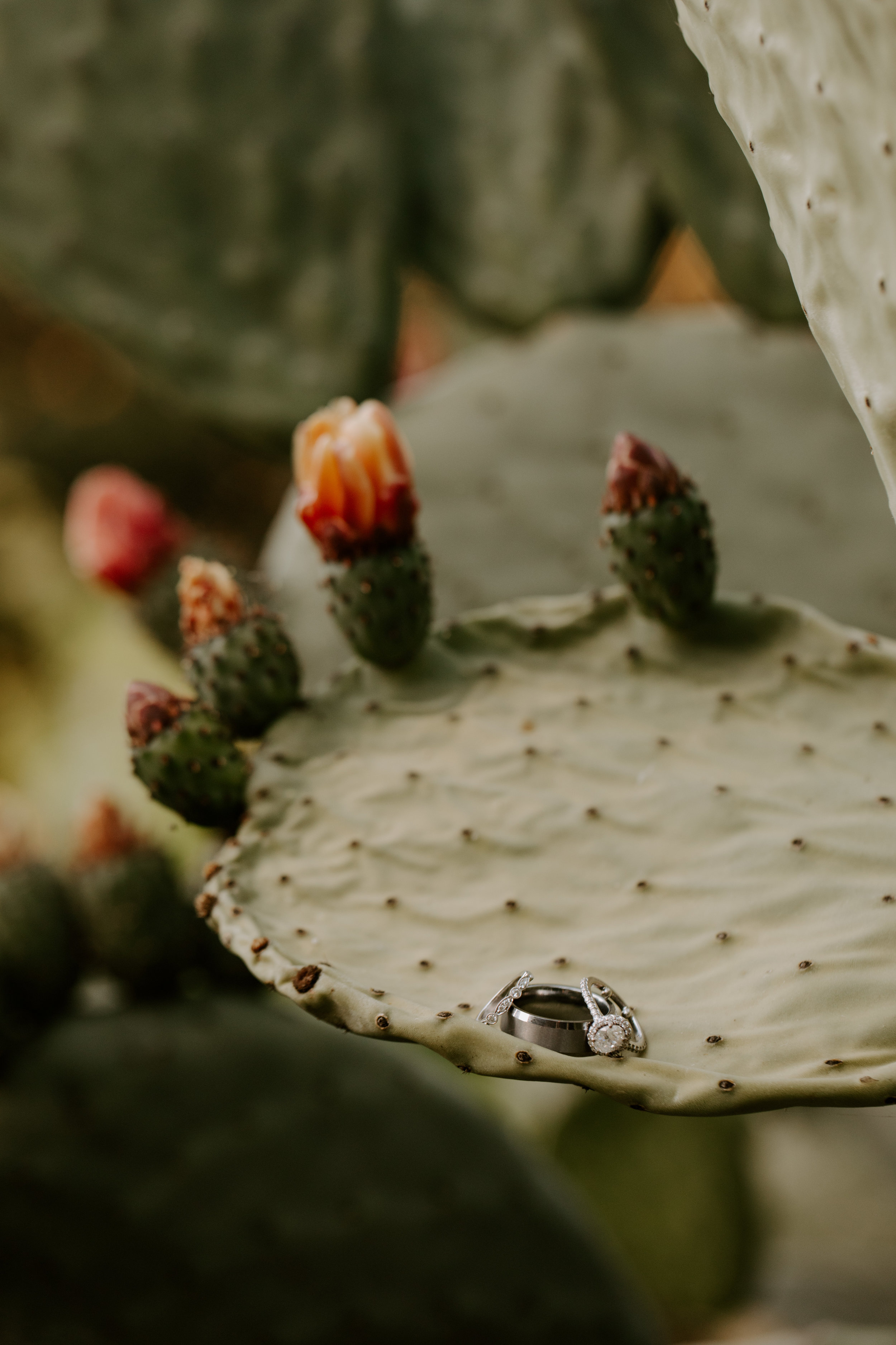 big sur bakery california wedding reception-29.jpg