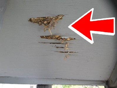 Over time you'll have rotted soffits from the squirrel nest and urine.