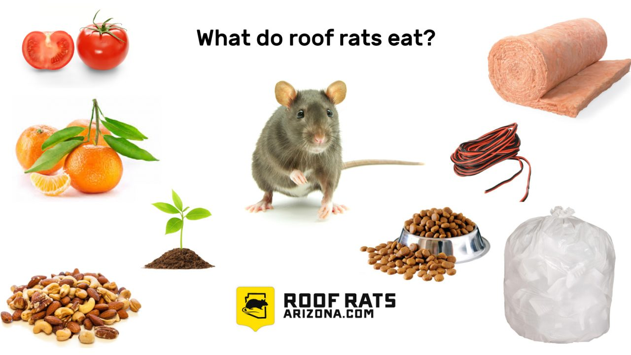 Roof Rats: they can destroy interior wiring and can fit through a hole the size of a nickle.