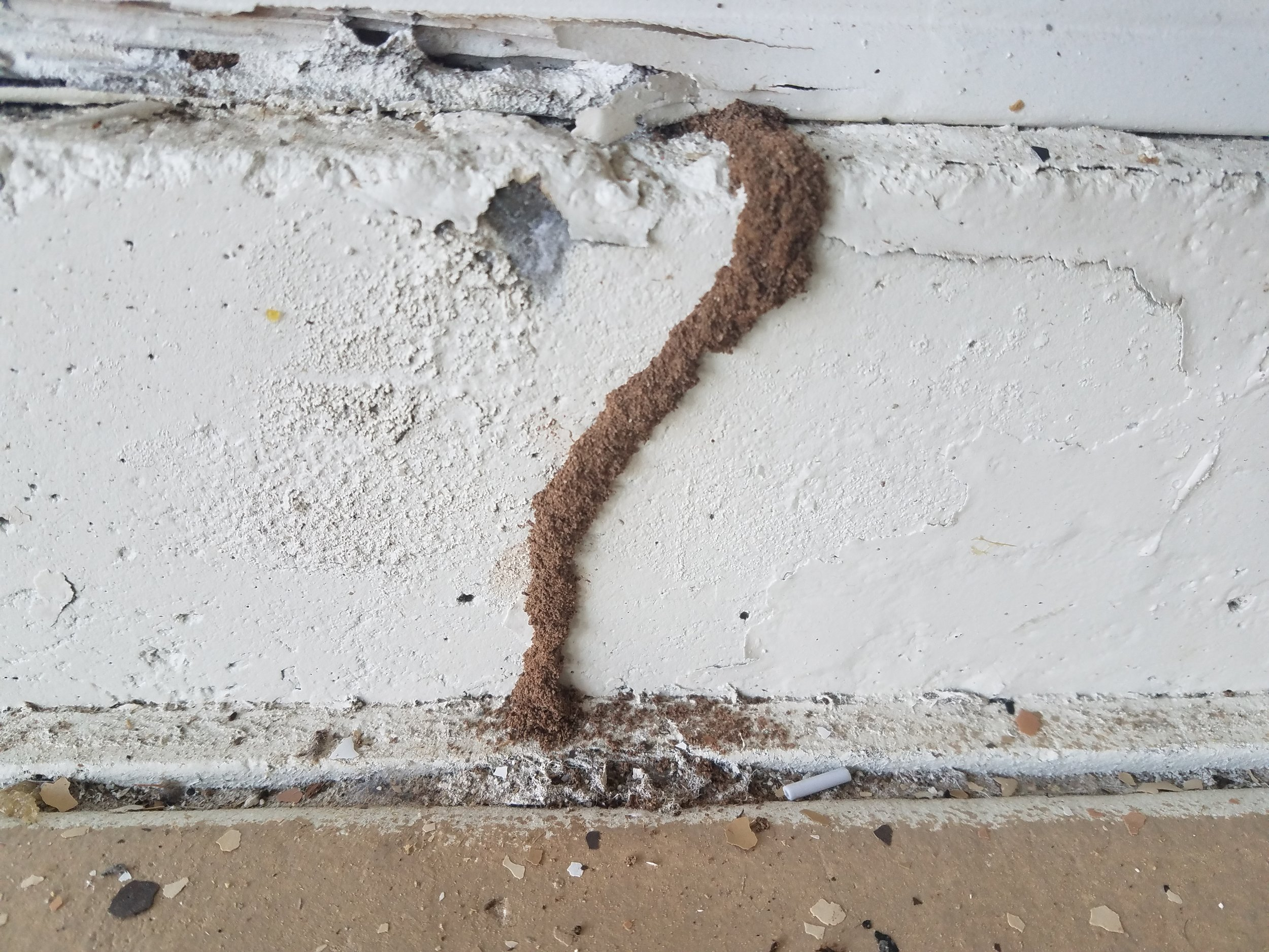 Termites thrive here in Arizona. A home owner might find evidence of them in the garage, at foundations, door frames, in the attic or ceilings. Just because you don't see termites, doesn't mean they're not in your home.