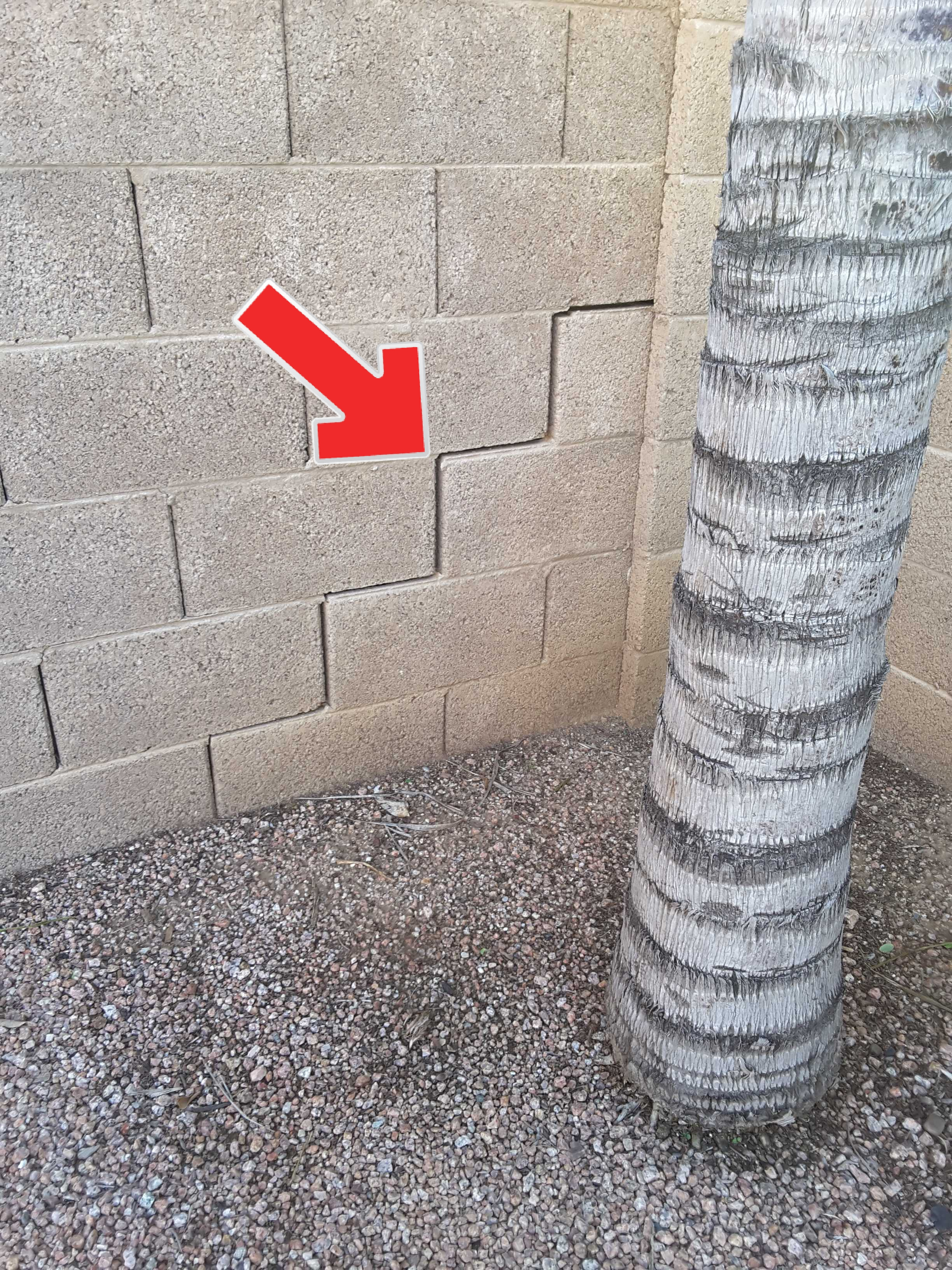 Trees planted too close to block walls will eventually cause cracking, displacement and costly repairs.