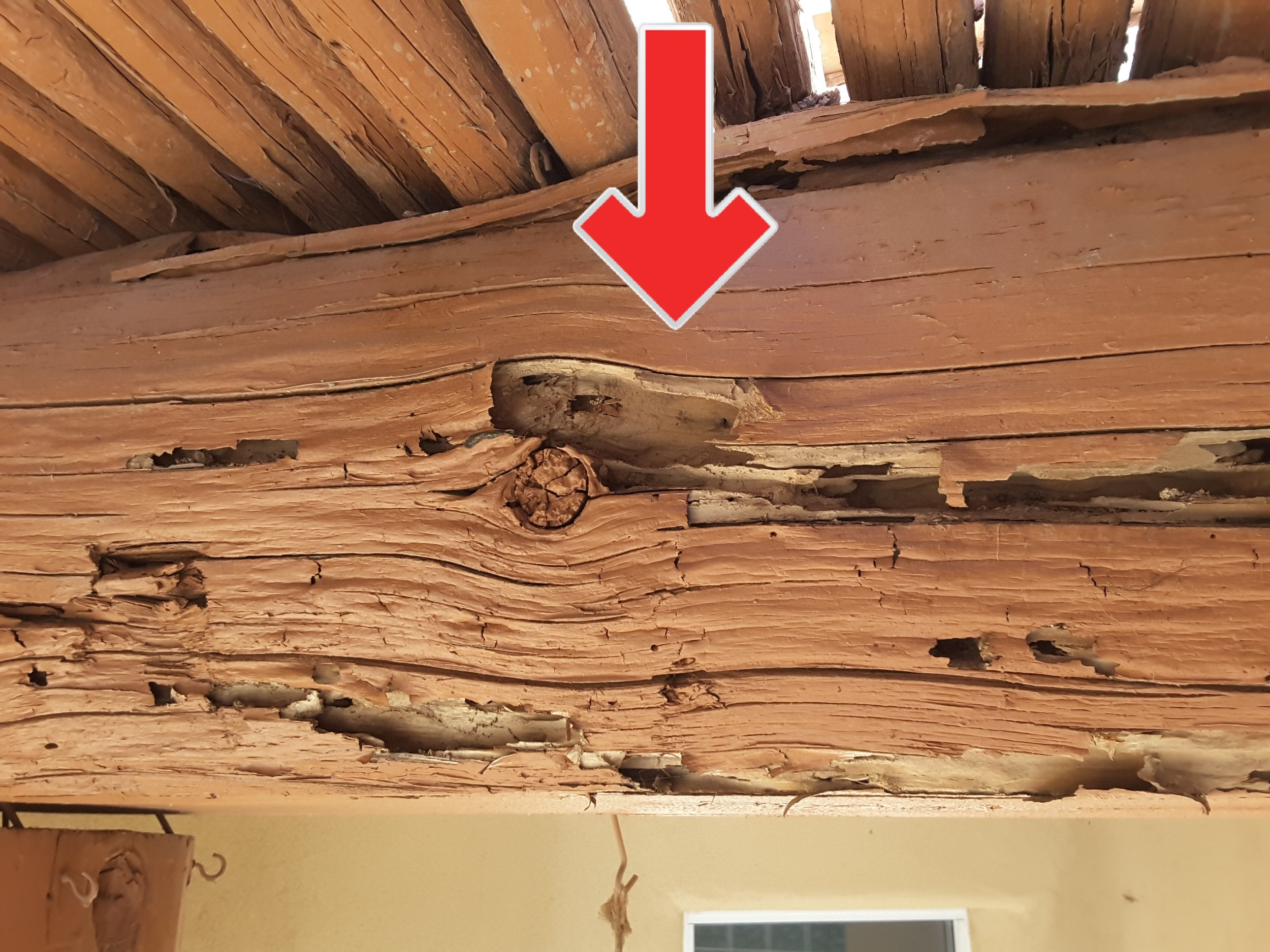 A large portion of this beam has been hollowed out by termites. A termite inspection is highly recommended on all homes before purchase.