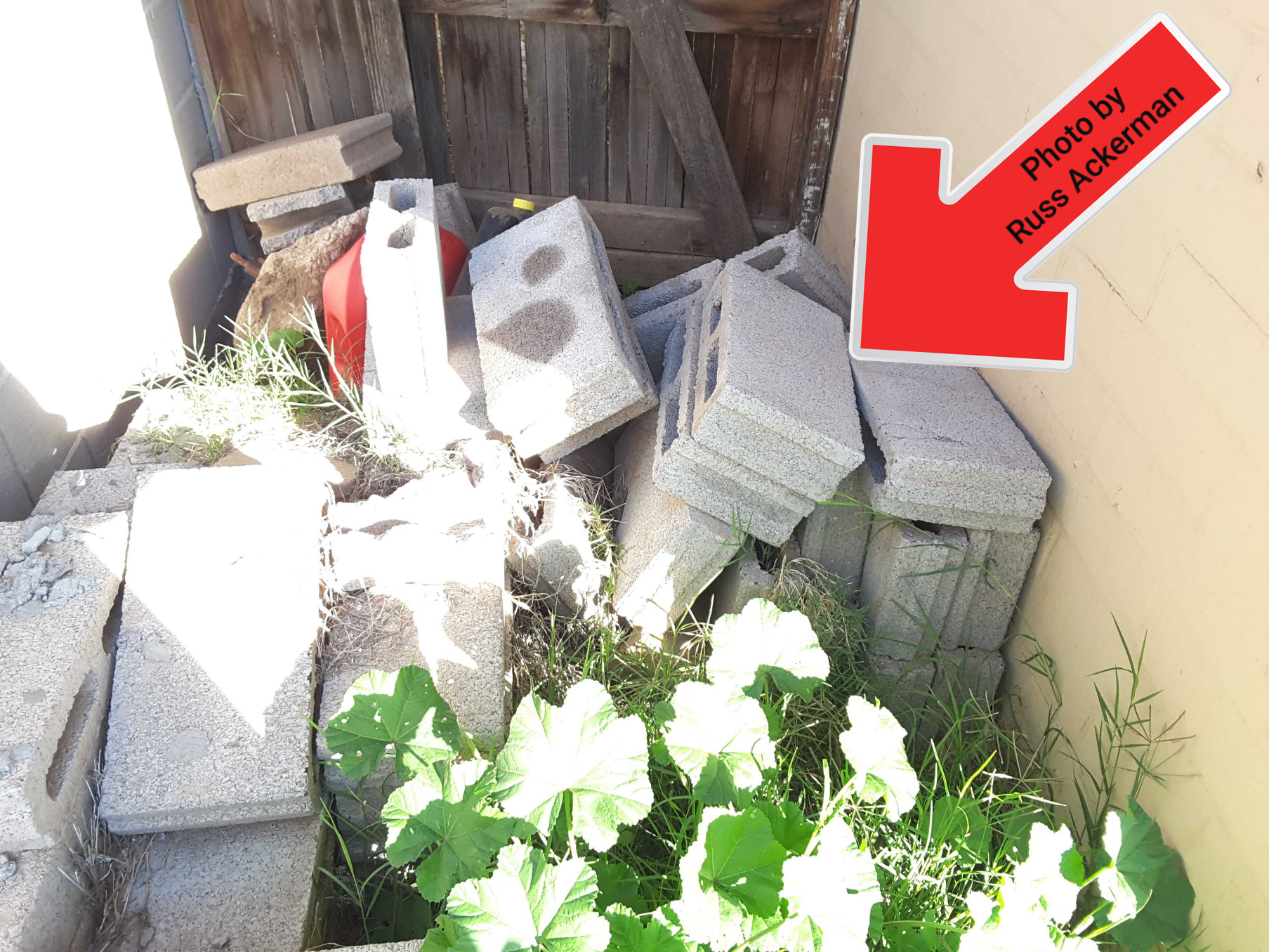 Do you hate rodents? Then why create a perfect home for them with piles of debris & allowing vegetation to grow against your home?