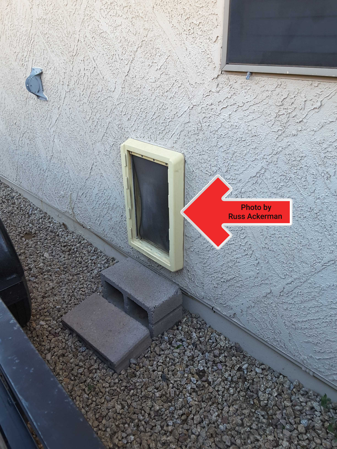 Large pet doors are a potential security issue, many homes are broken into by people entering thought a pet door. They should also not lead to a pool area.