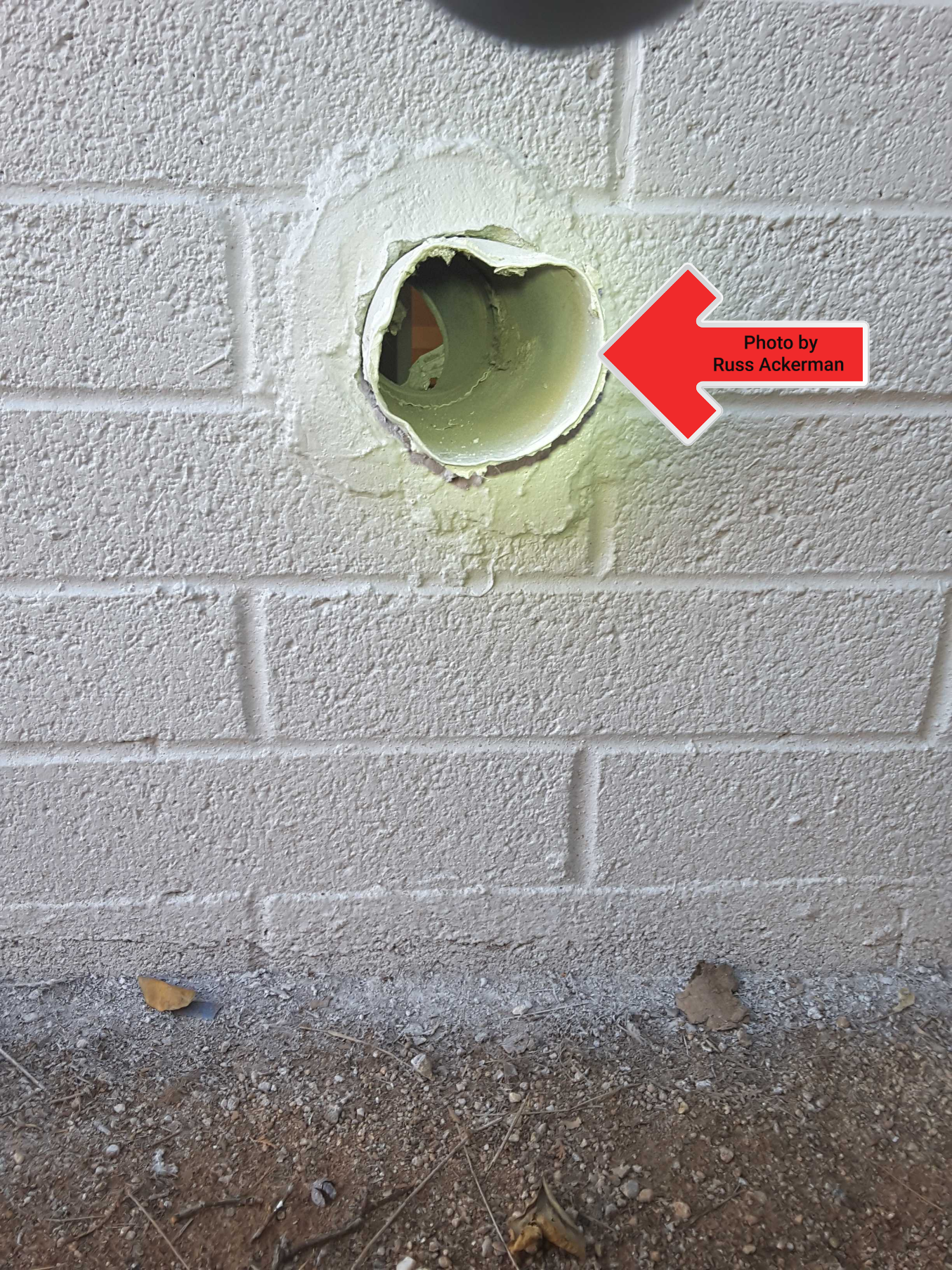 Dryer exhaust vents missing an exterior louvered cap will allow birds, rodents and pests into your home.