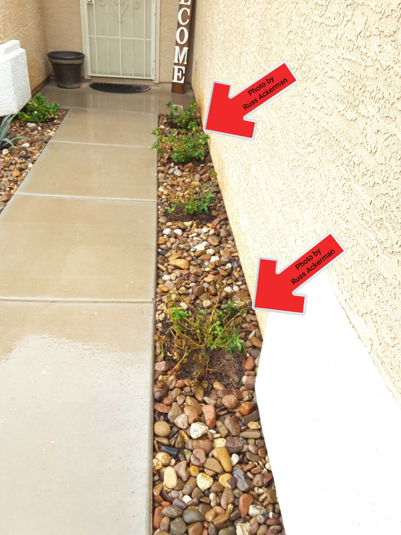 Vegetation near the home is not advised, it holds water near the foundation, could damage paint surfaces and siding and creates conditions conducive to termites and pests.