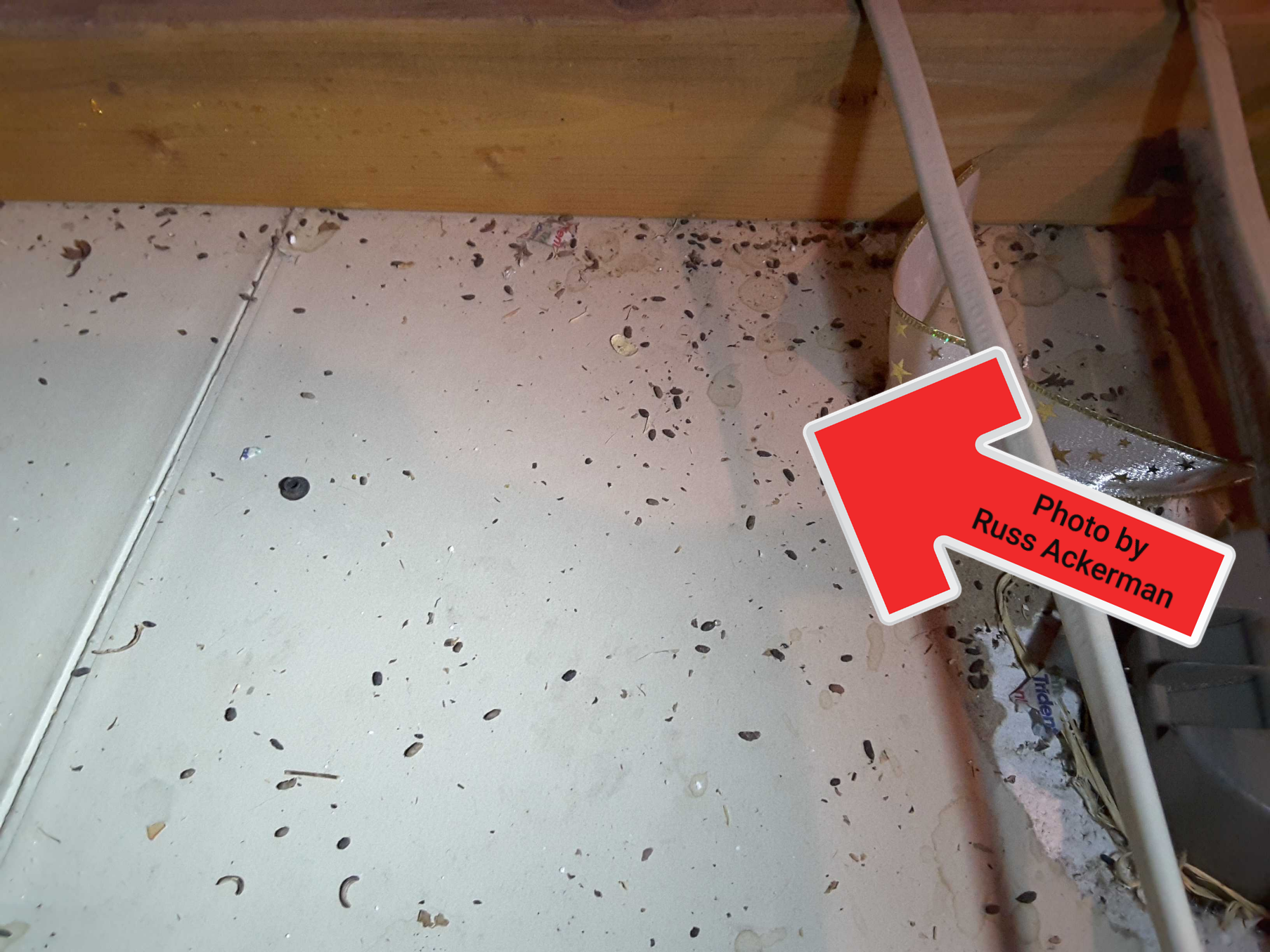 This home had heavy rodent activity in the attic. Once they move in and get comfy, it'll take even more work to eradicate these vermin.