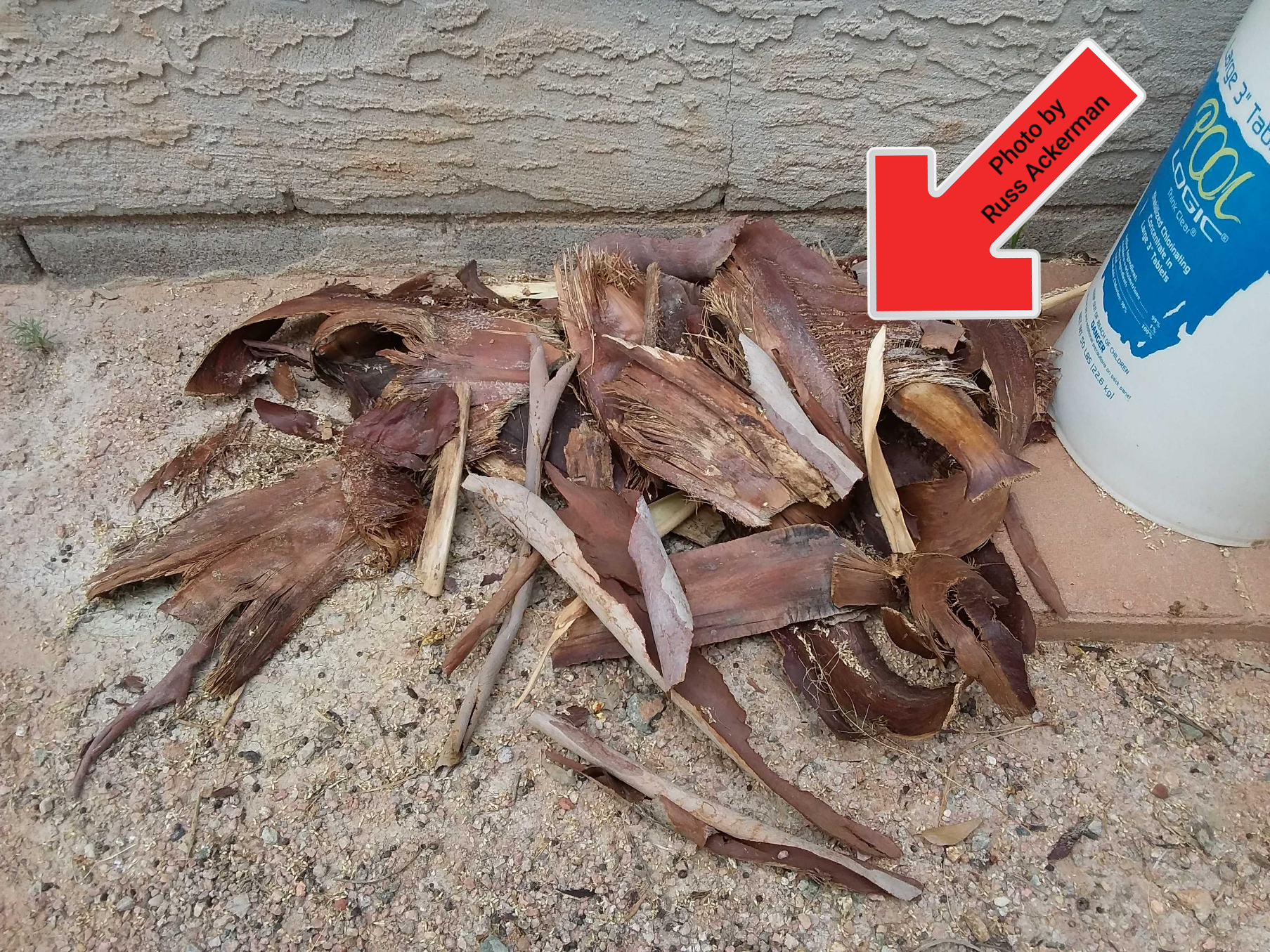 Debris from palm trees offer a perfect environment for scorpions and rodents. Keep exterior areas free of debris.