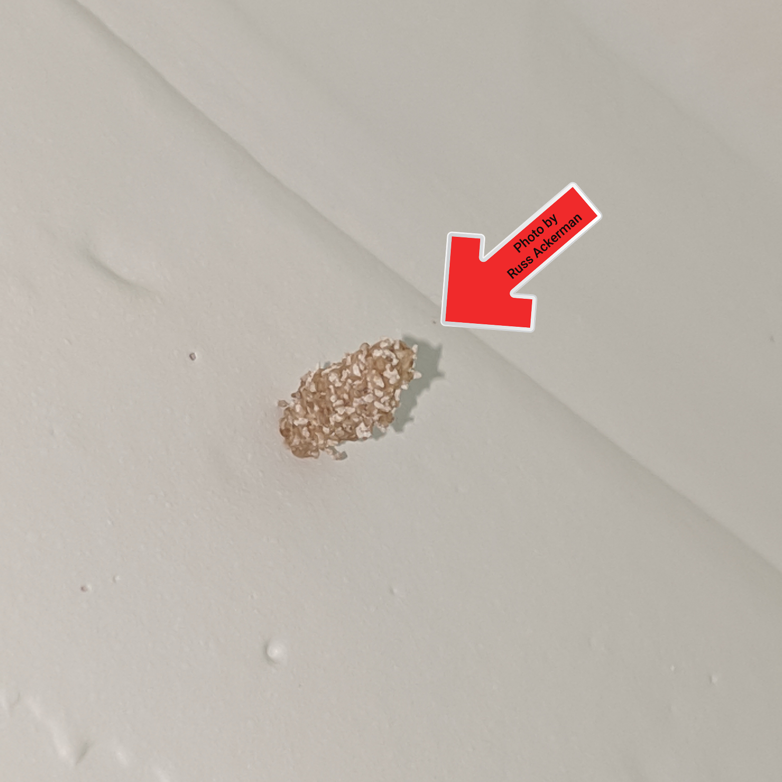 Termite drop tubes or exit holes can often be found at ceilings or walls, they may also look like pin holes, grains of sand or stalactites in a cave.