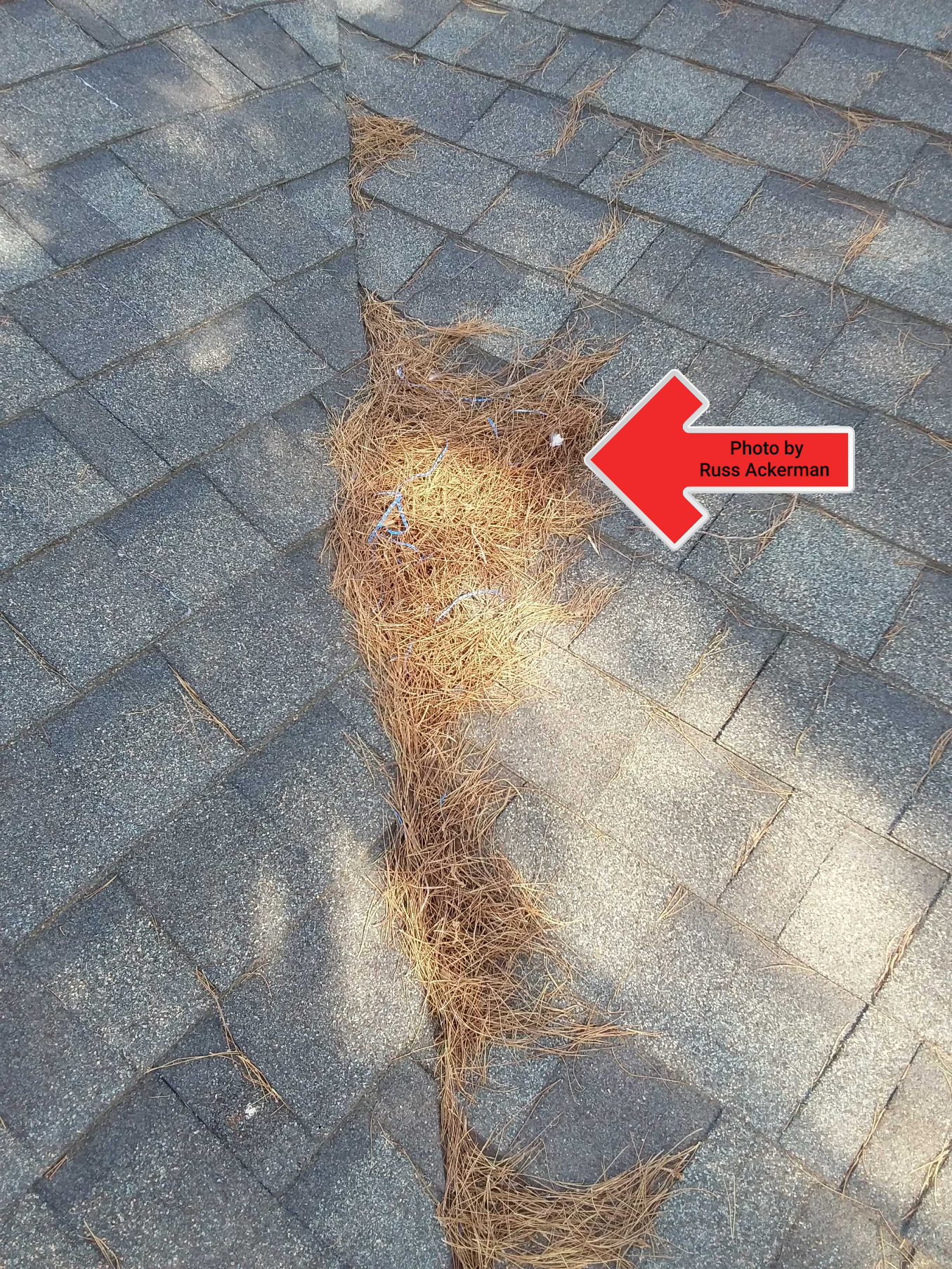 Keeping debris from piling up on any roof will assist in proper drainage and avoid providing a comfy place for birds or rodents.