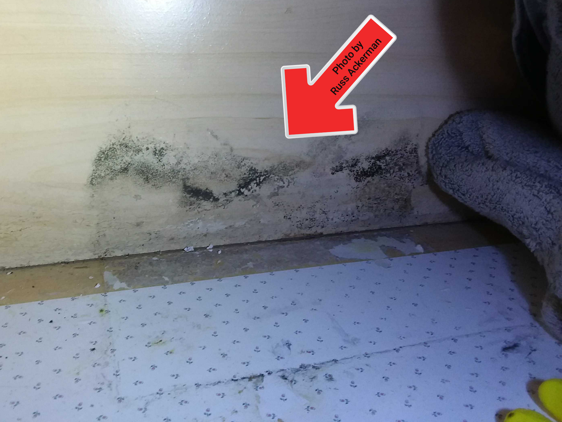 Leaking bathroom sink and mold growth. When was the last time you removed all the junk under you sinks to check for leaks?