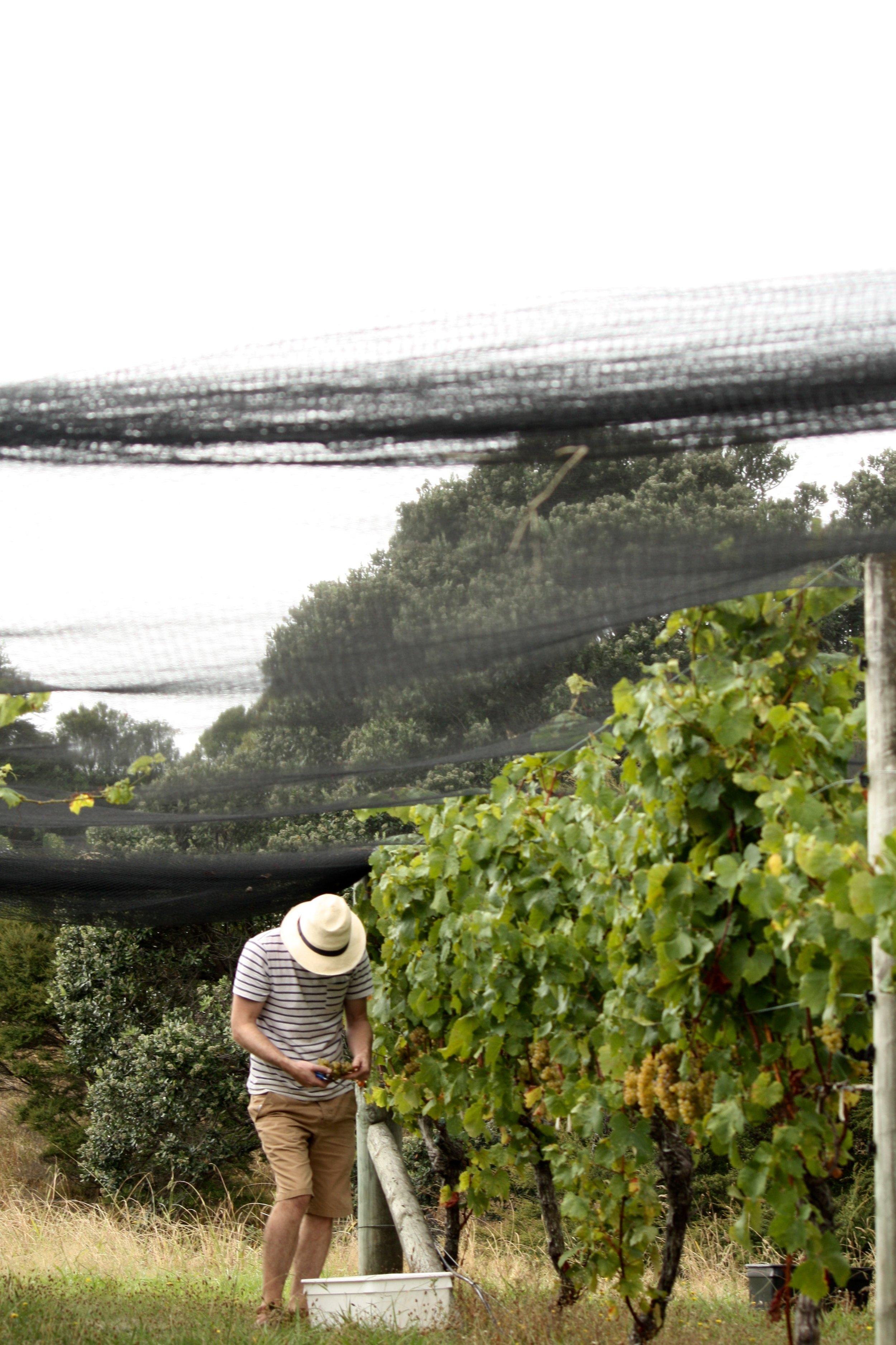 Sam Harrop Wine